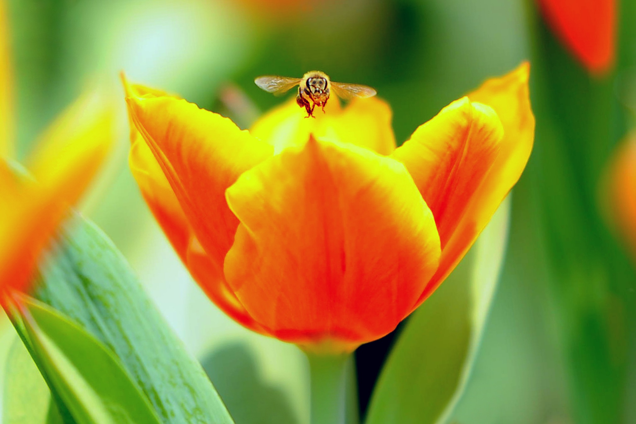 Mr Honey Bee by leka huie