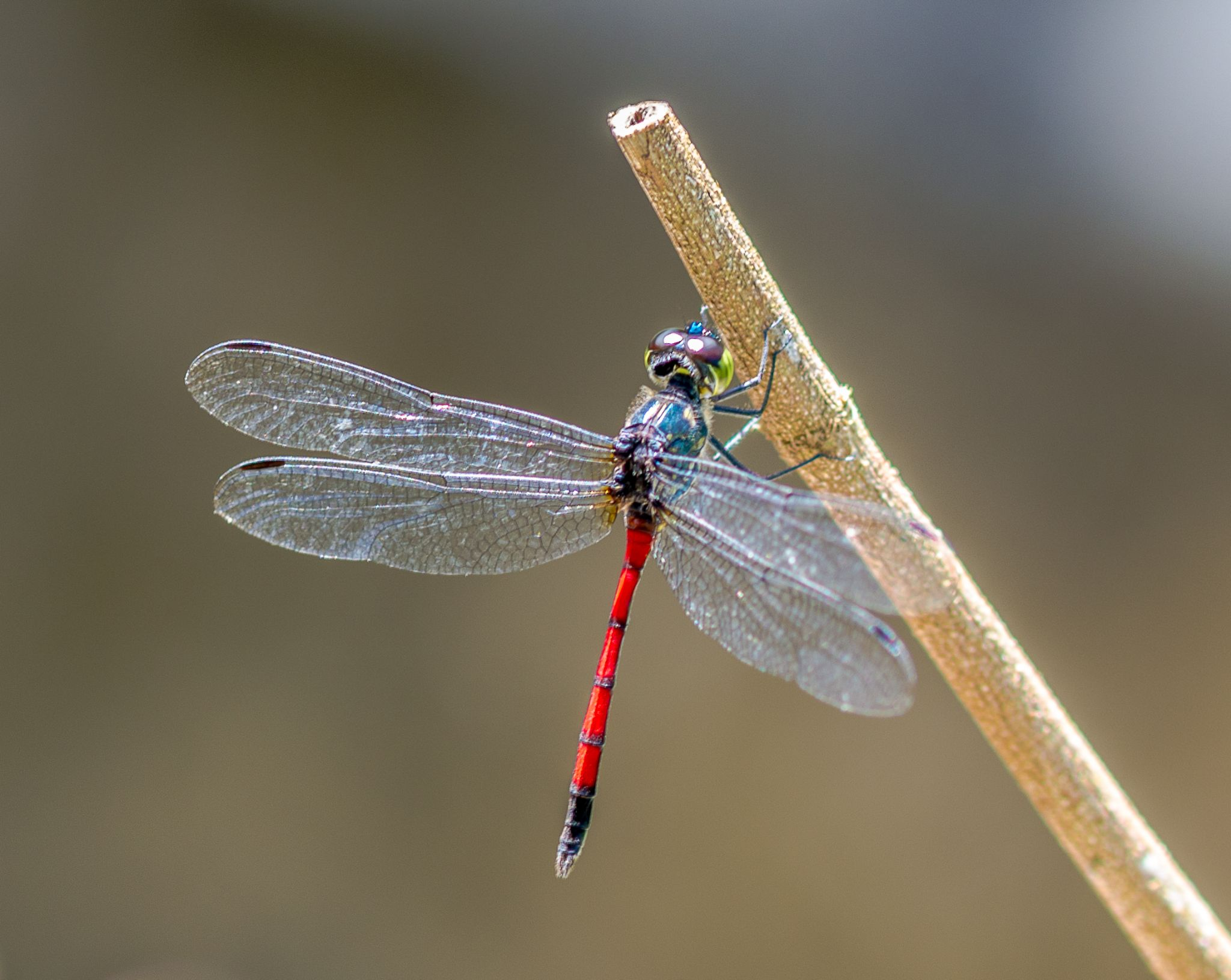 Dragonfly by albert.lee.98892