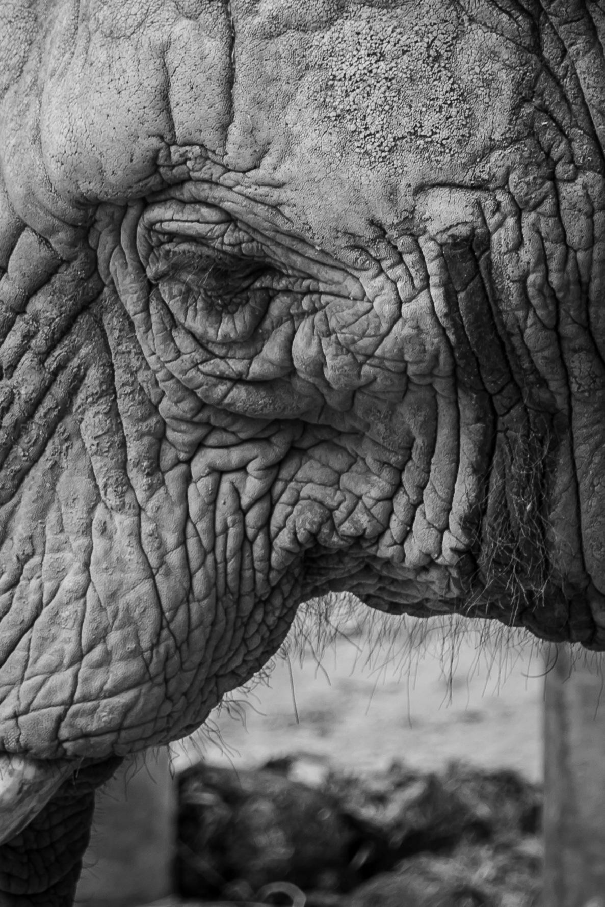elephant detail by Laurent Adien