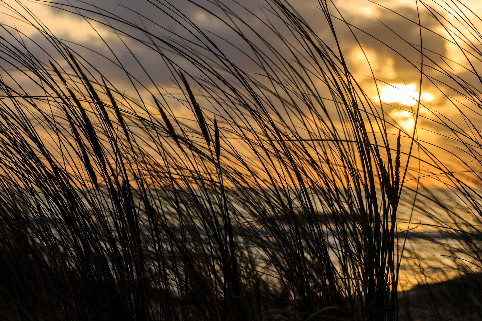 Evening Air by Laurent Adien