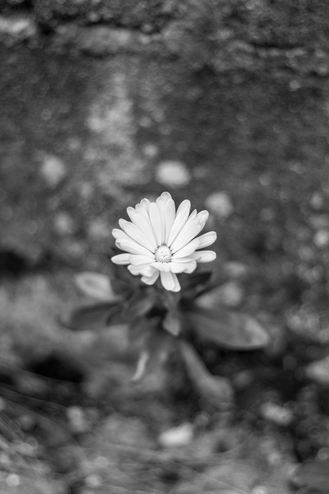 Faites-moi une fleur by Laurent Adien