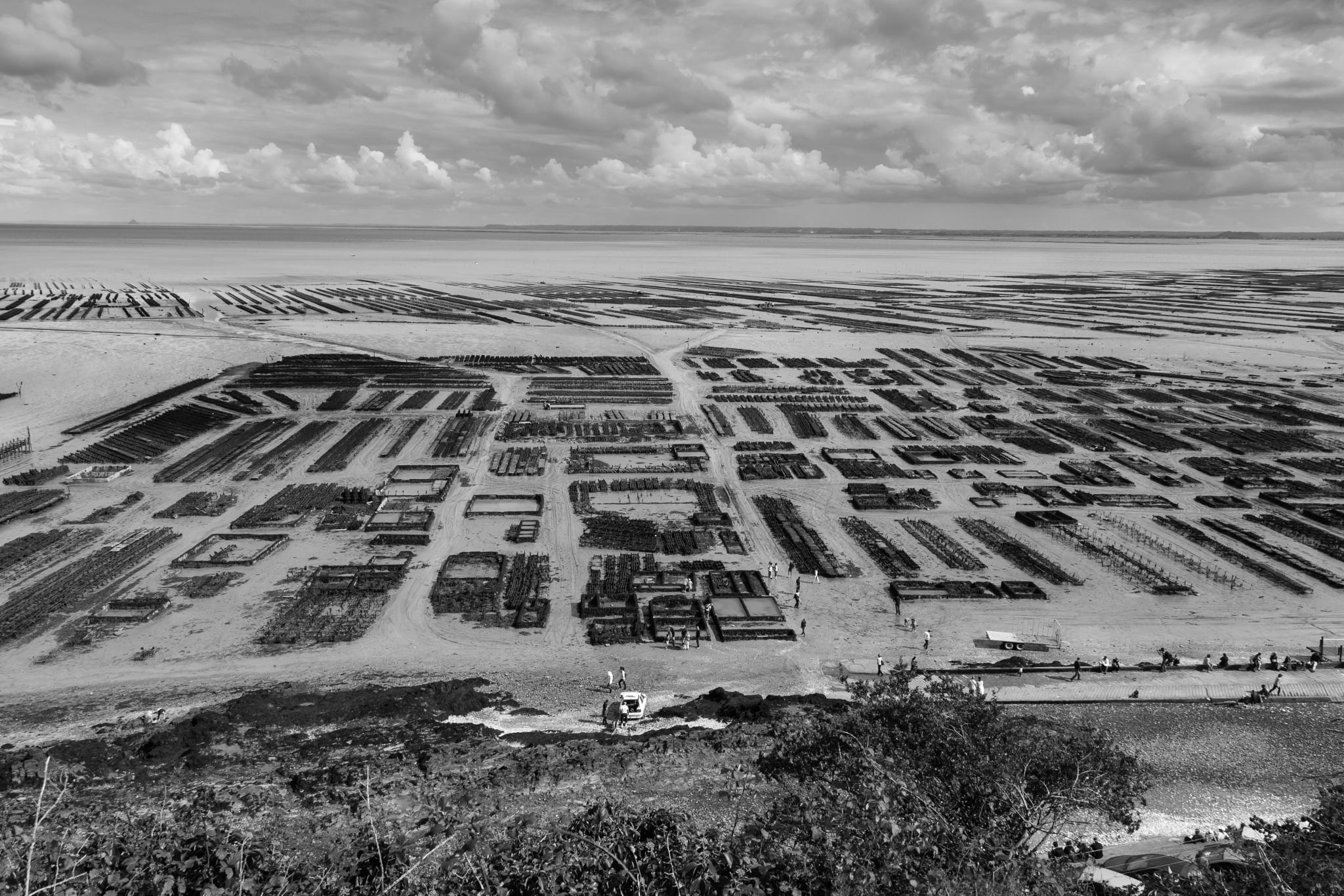 Oyster maze by Laurent Adien
