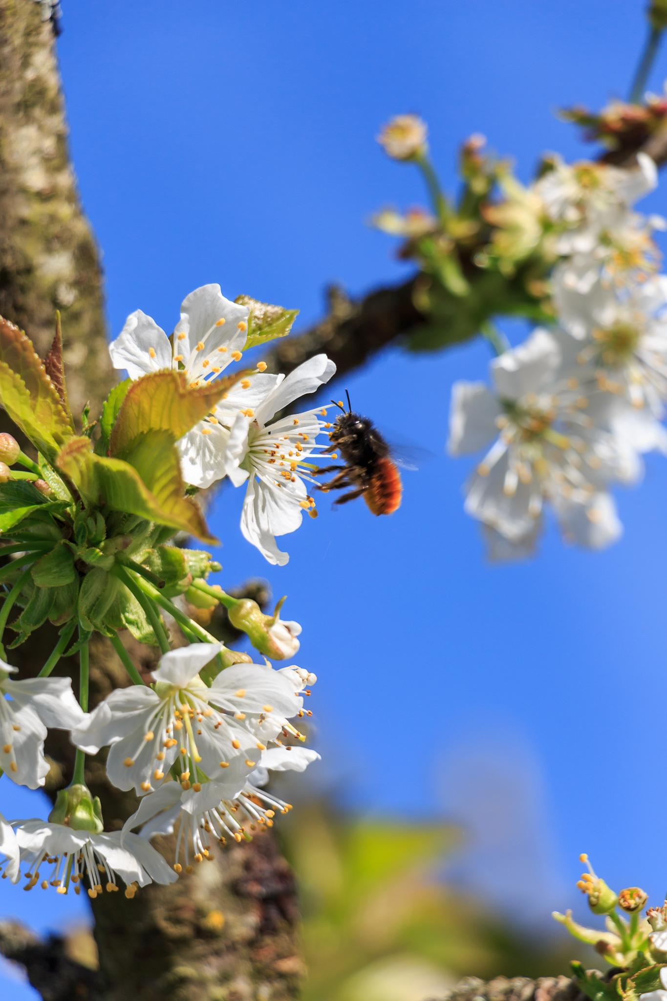 Busy buzz by Laurent Adien