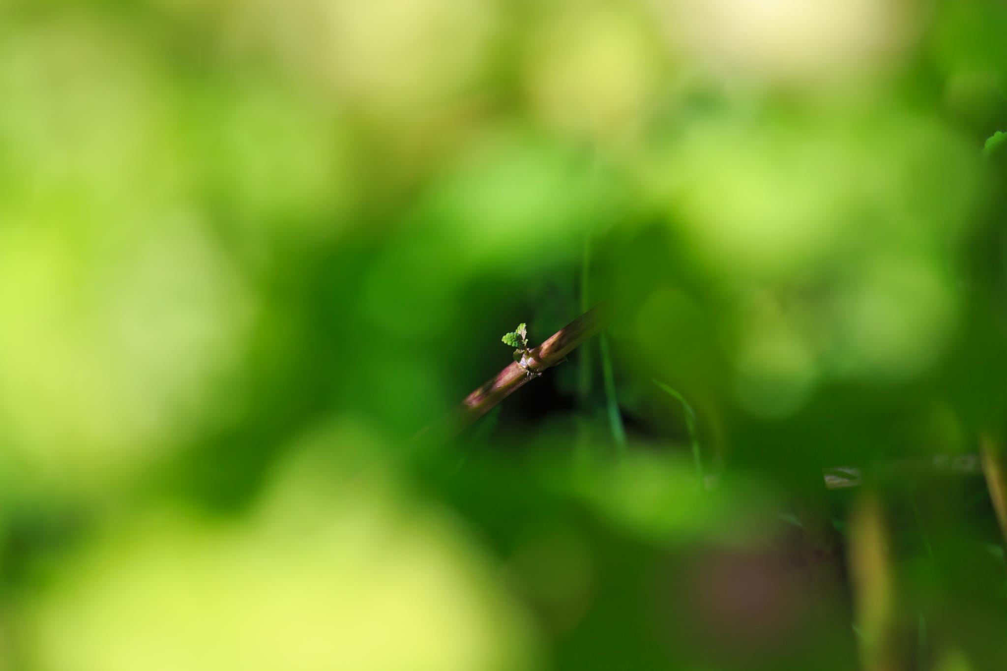 Hidden nature by Laurent Adien