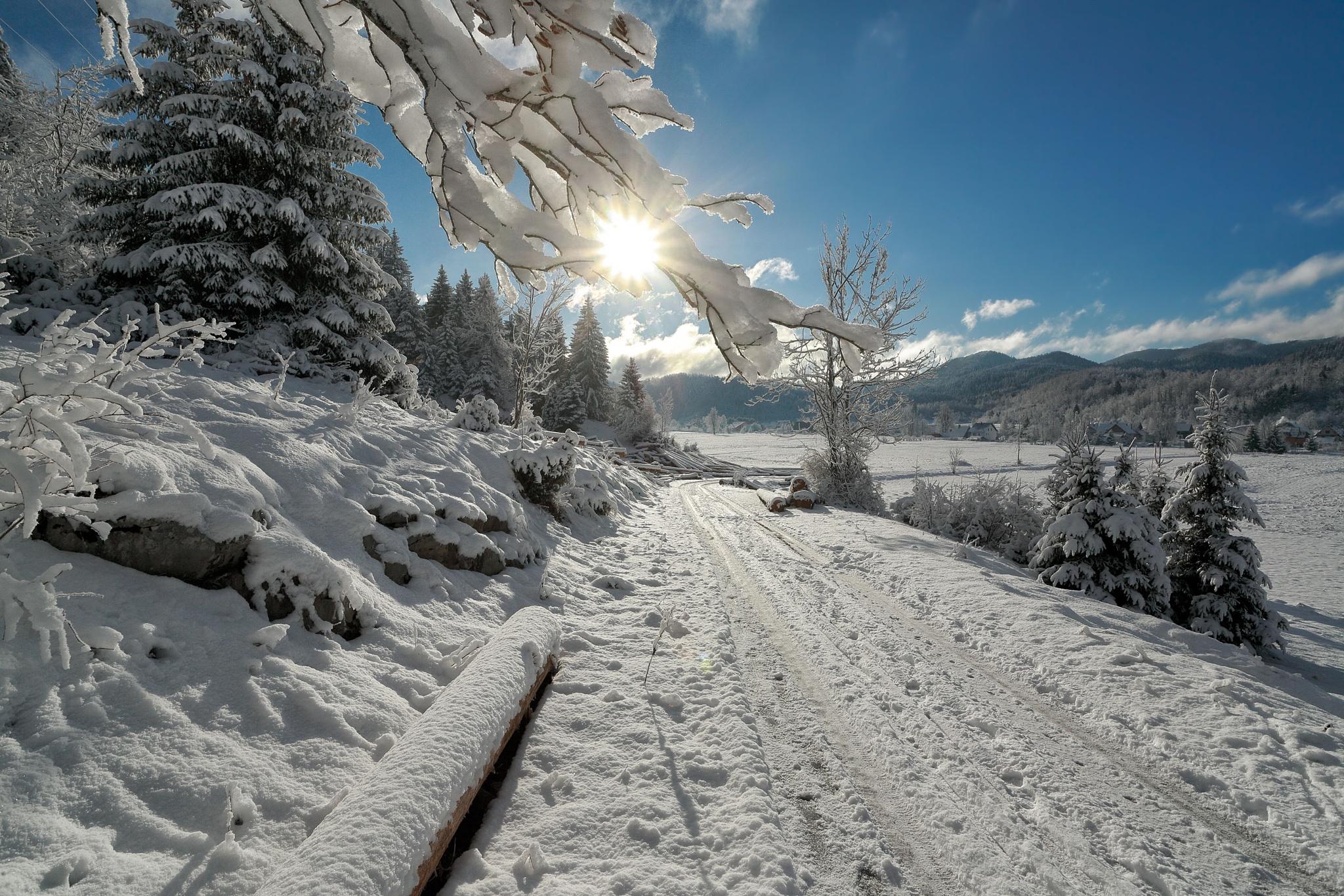 Forest road by stanislav.horacek2