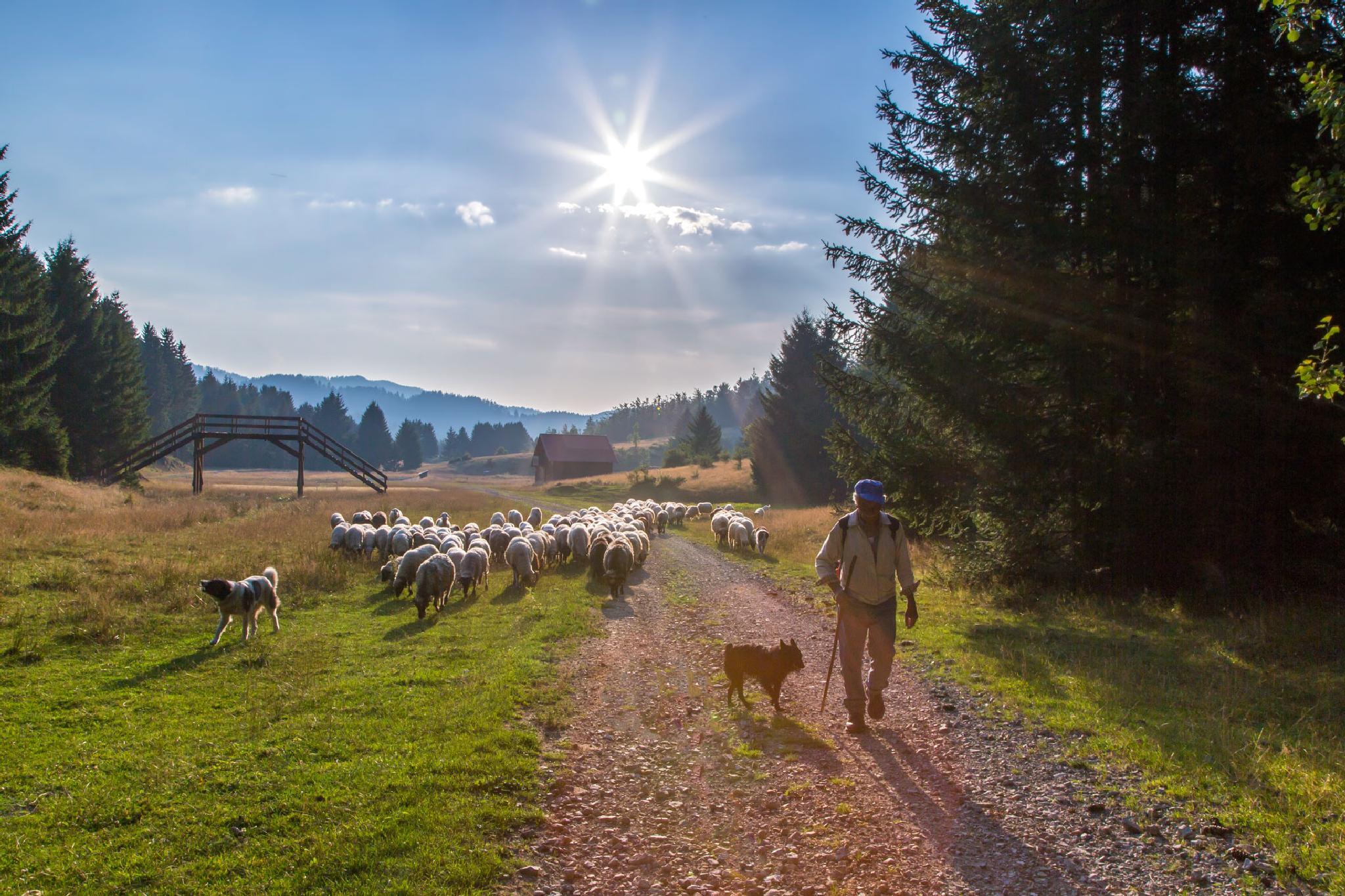A flock of sheep by stanislav.horacek2