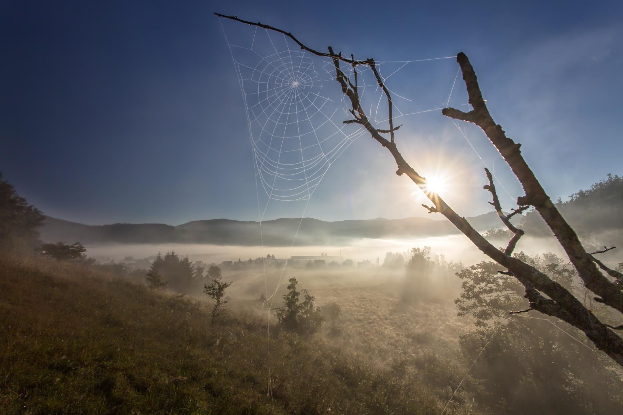 morning haze by stanislav.horacek2