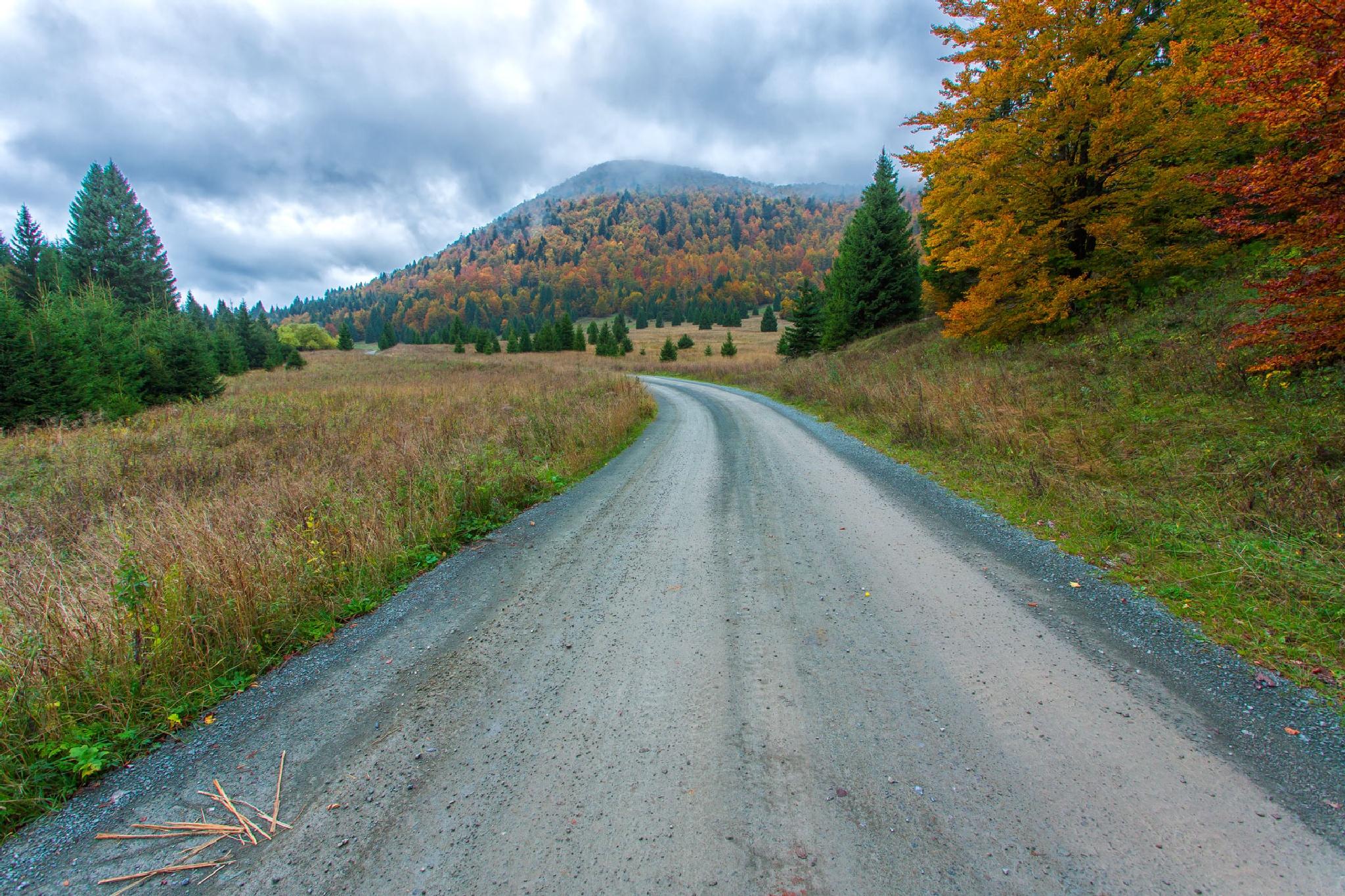Golden road by stanislav.horacek2
