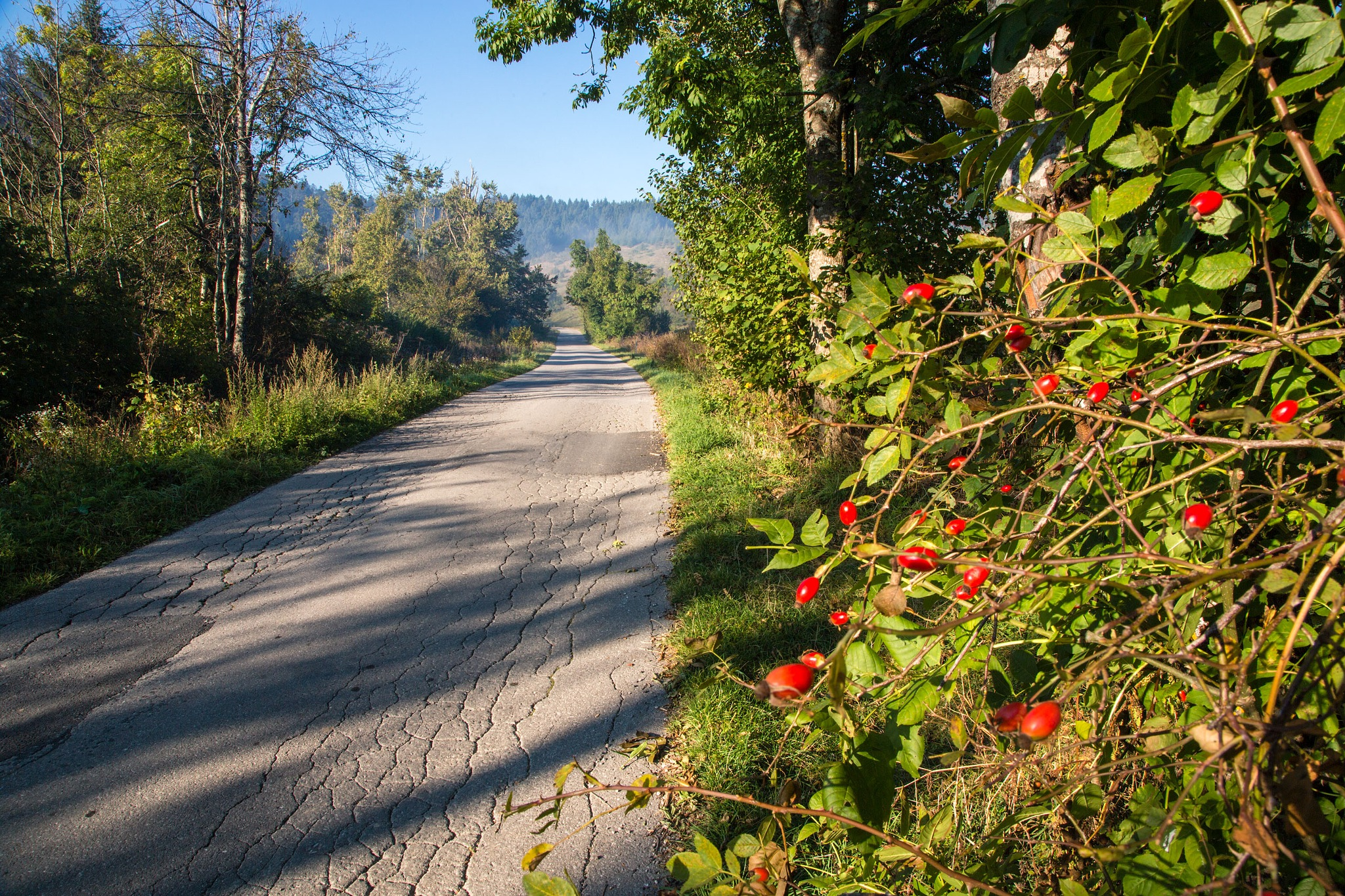 Autumn fruits by stanislav.horacek2