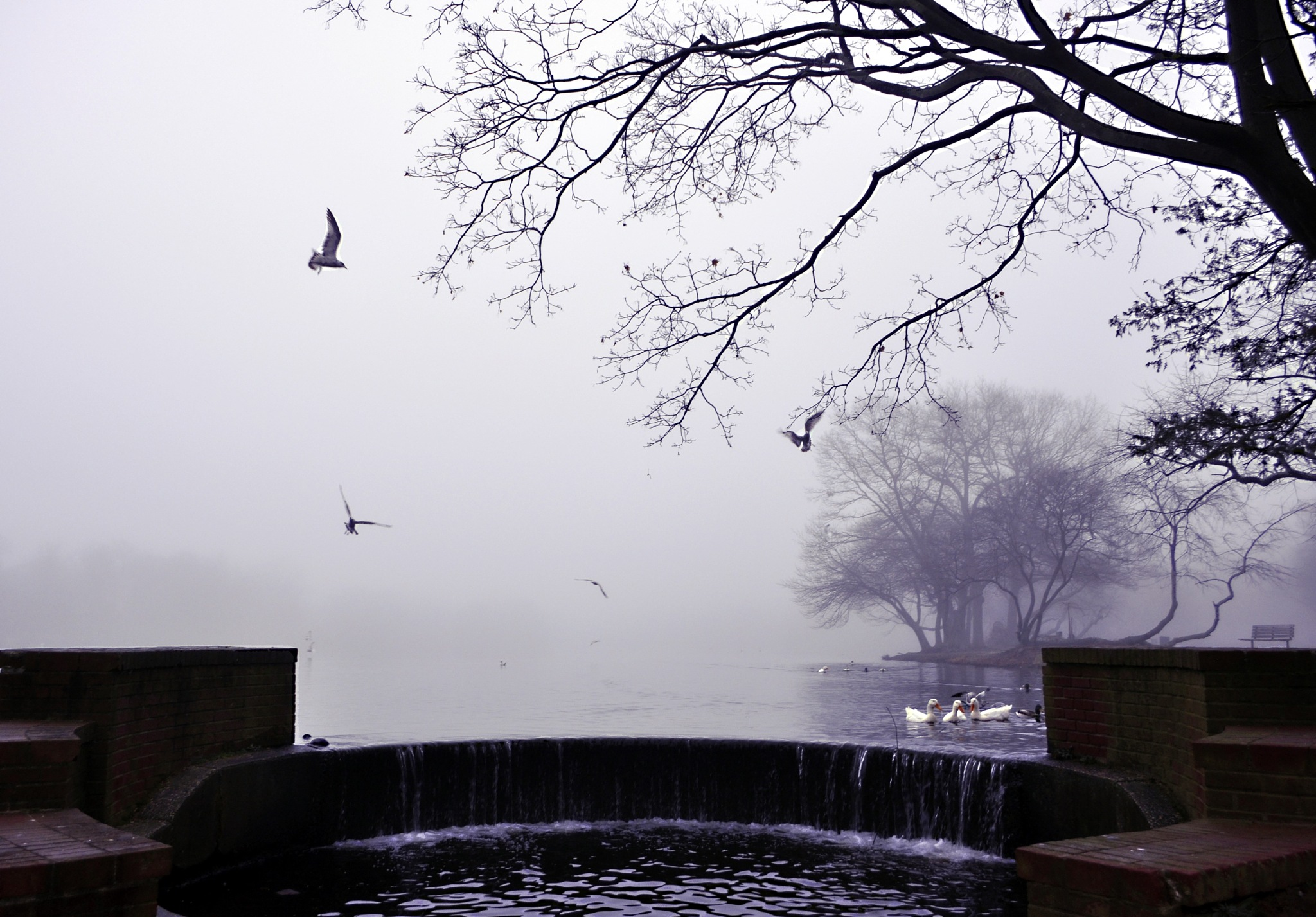 Foggy Morning on the Lake by Joan