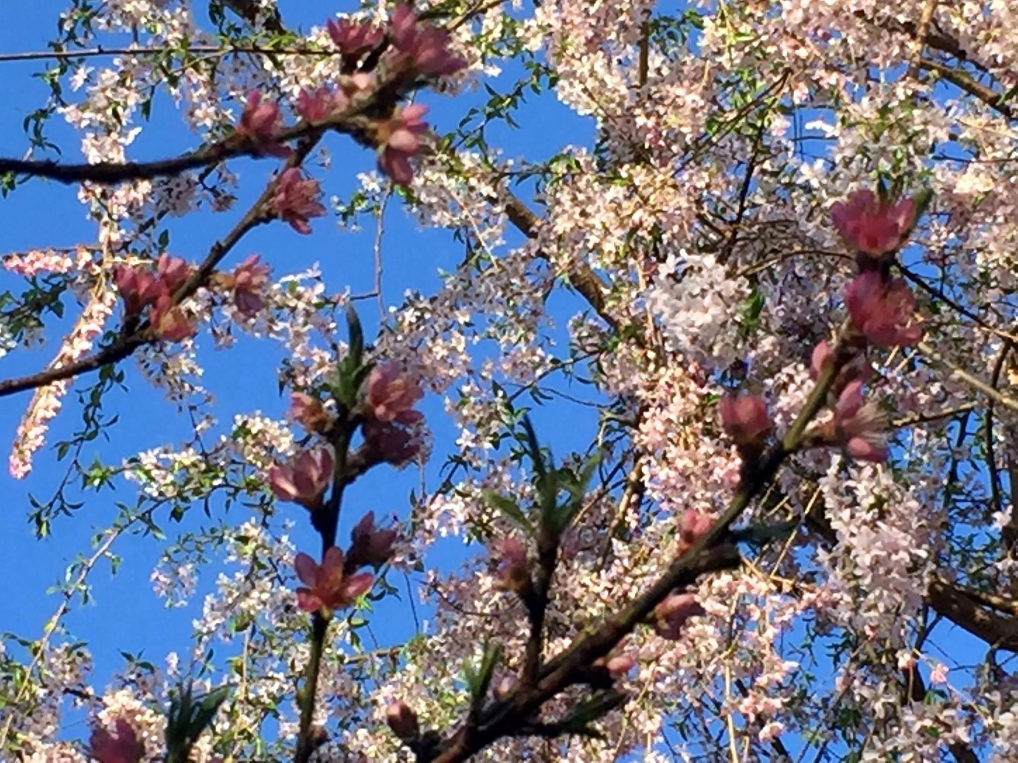 Cherry Tree Cross by Joan