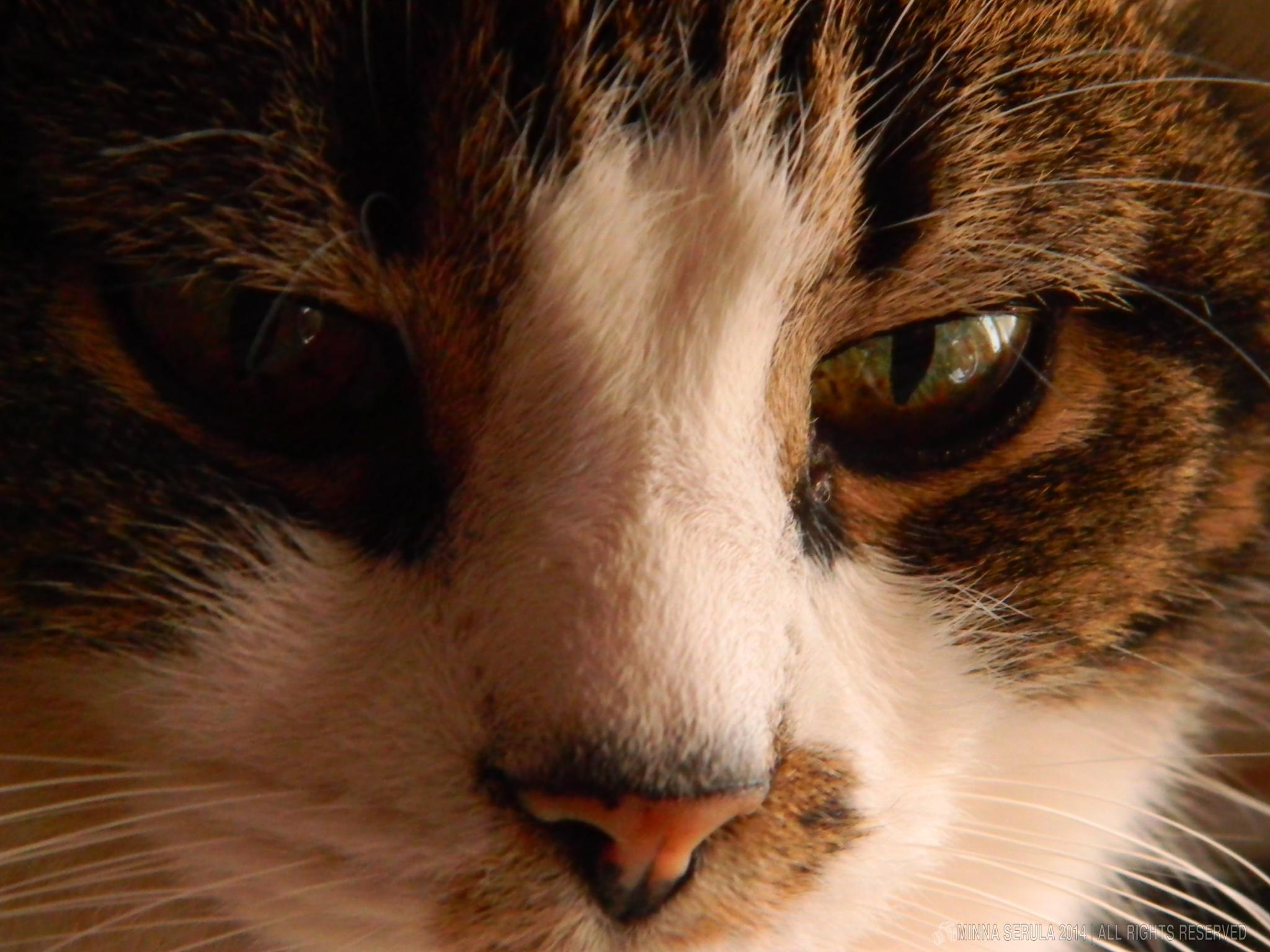 Cat by Minna Serula