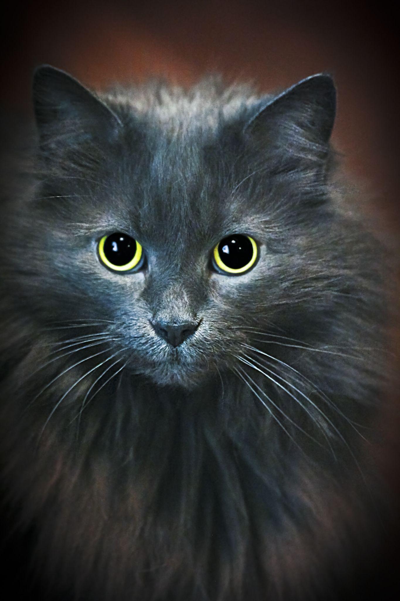 Beautiful Eyes by Susan Farris