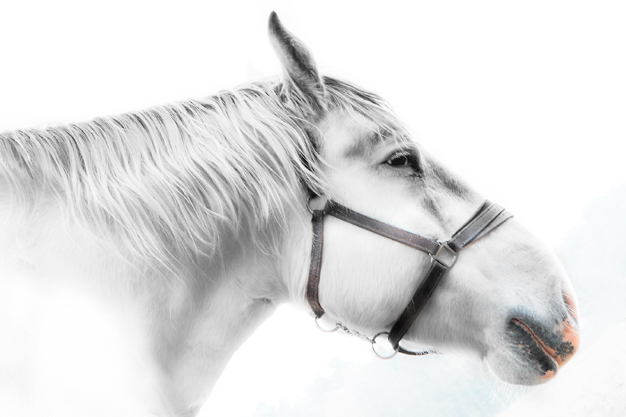 White spirit by gilclaes