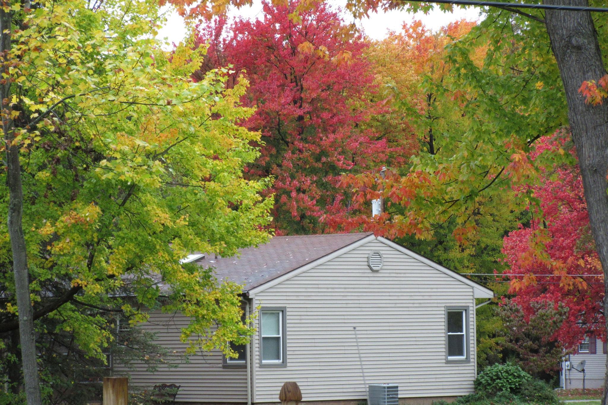 Not my House by Darlene Pavek