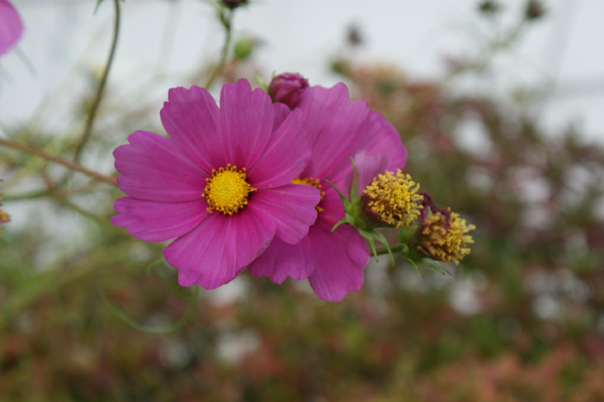 Flowers this time of Year by Darlene Pavek