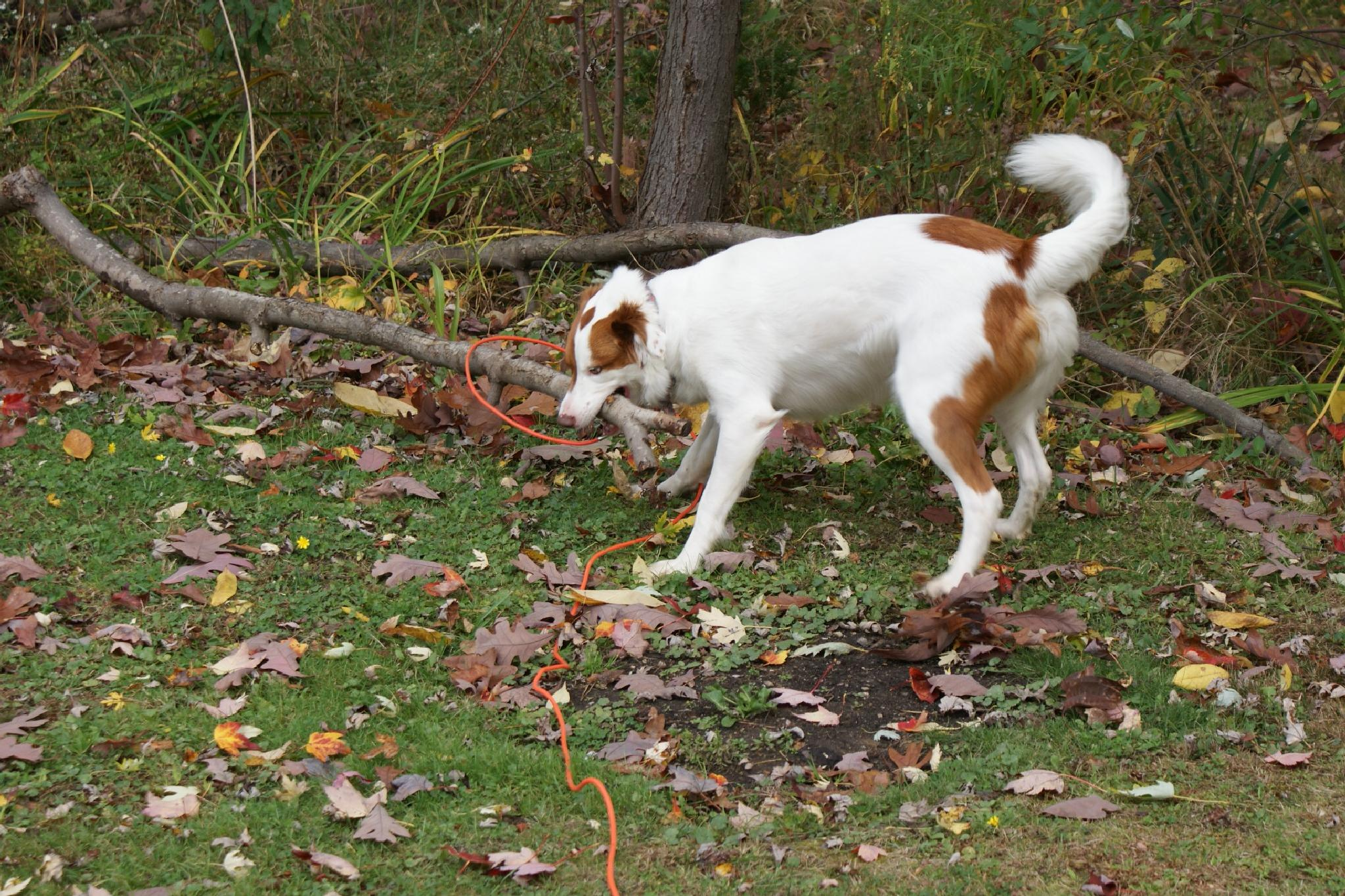 My Dog and Her Stick by Darlene Pavek