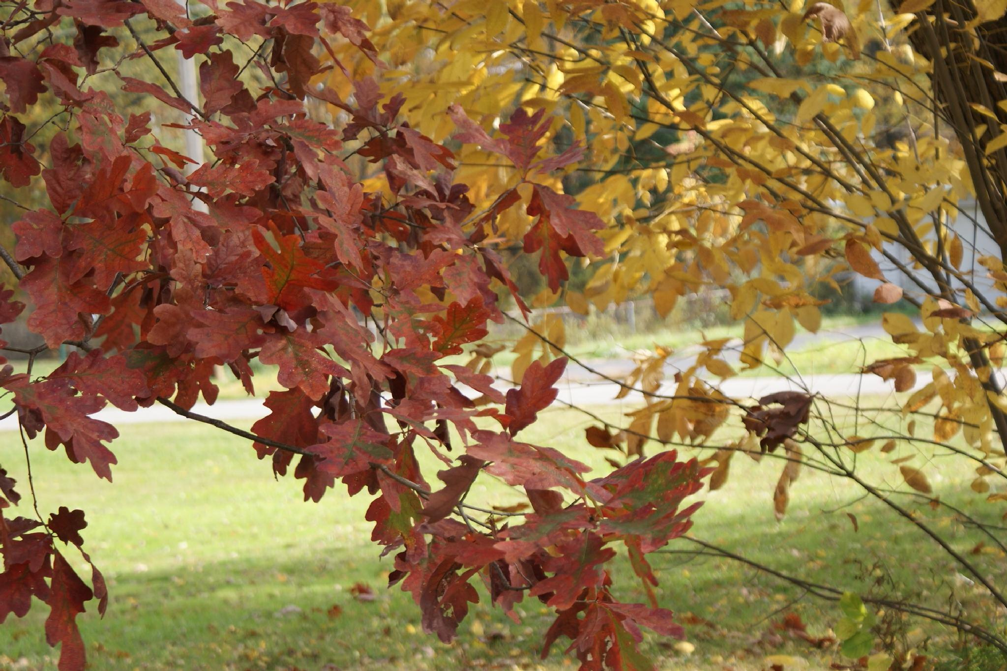 Different Color of Leaves by Darlene Pavek