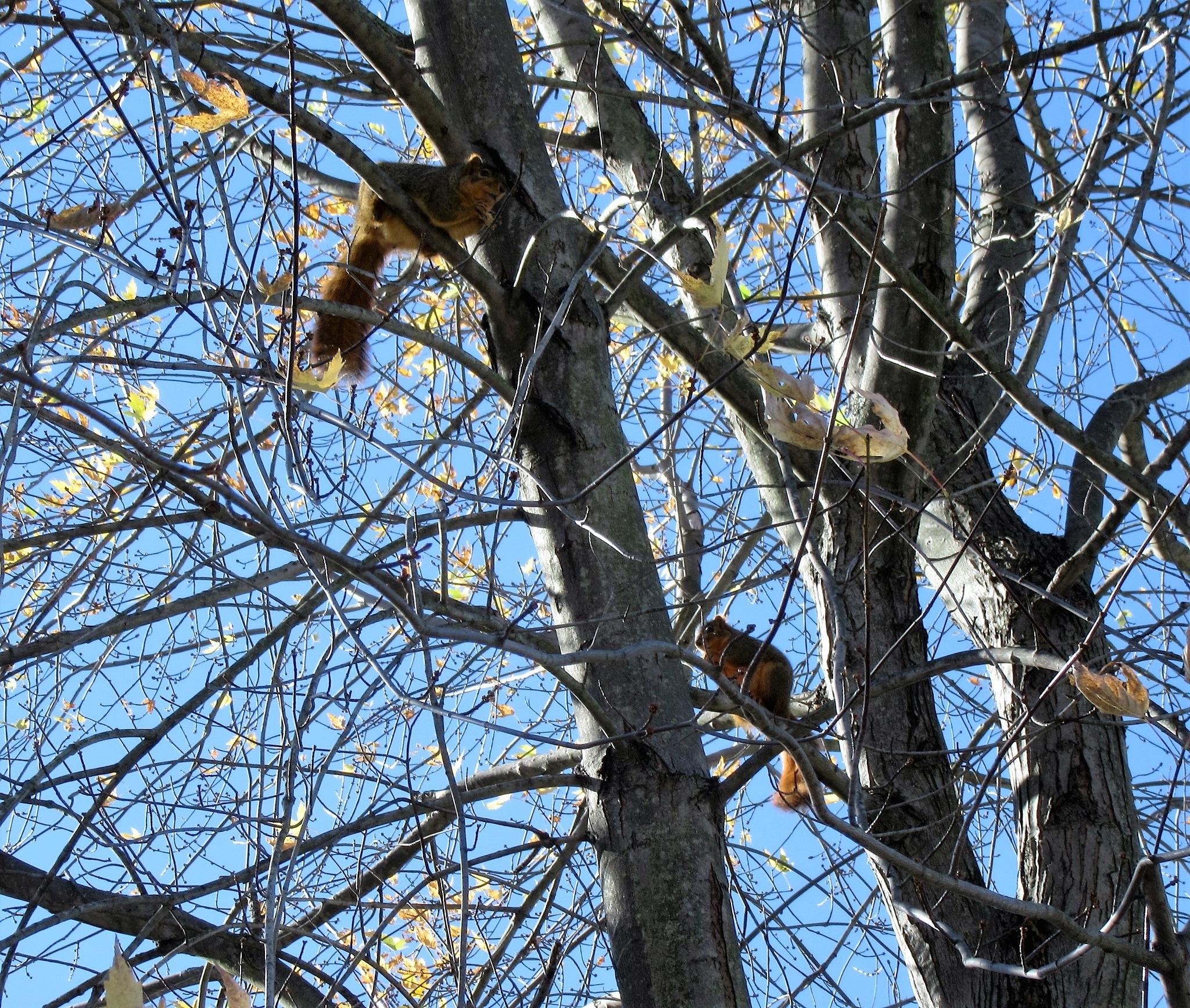 Sitting High in the Tree by Darlene Pavek