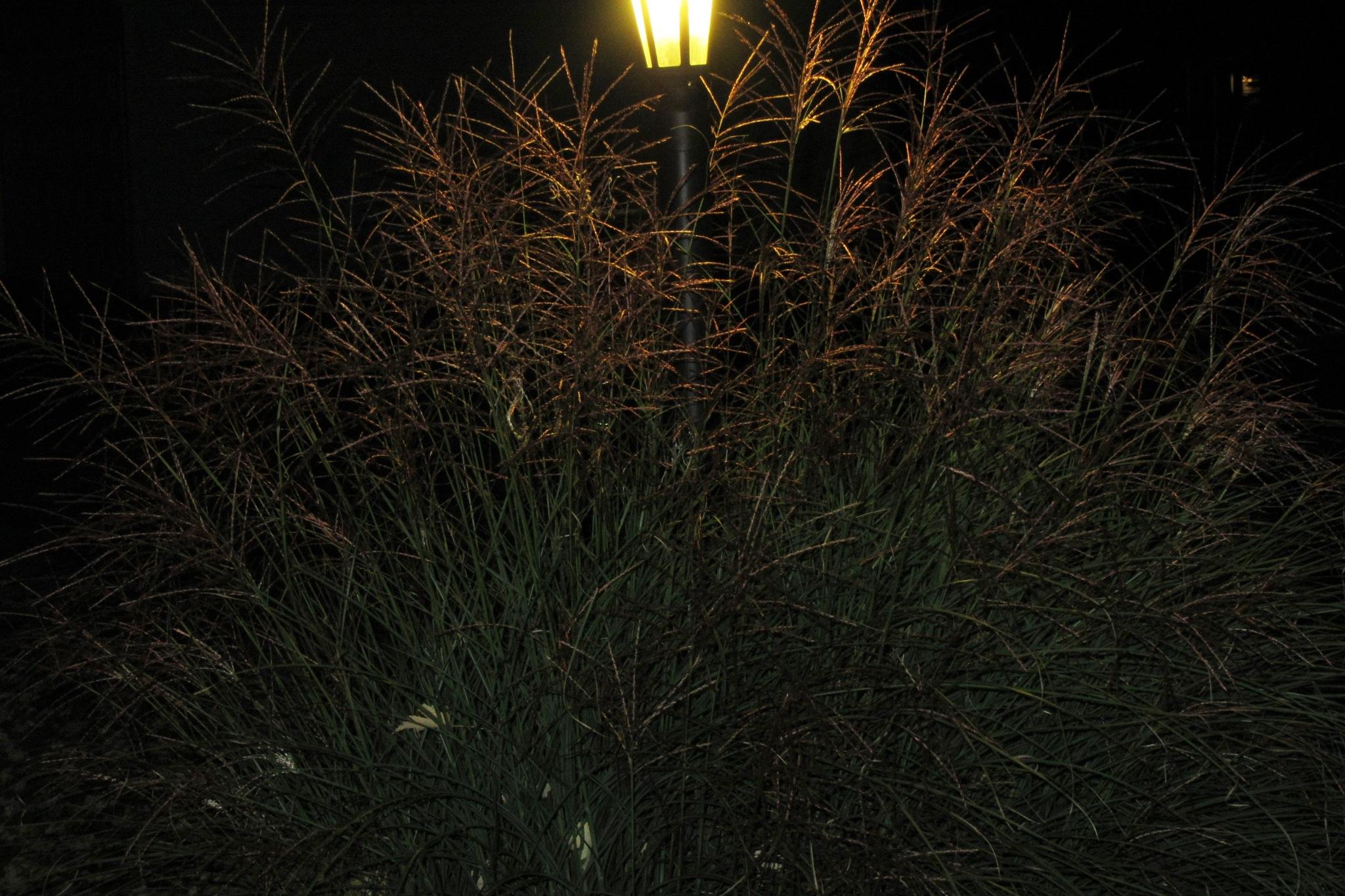 Grass around Light Pole by Darlene Pavek