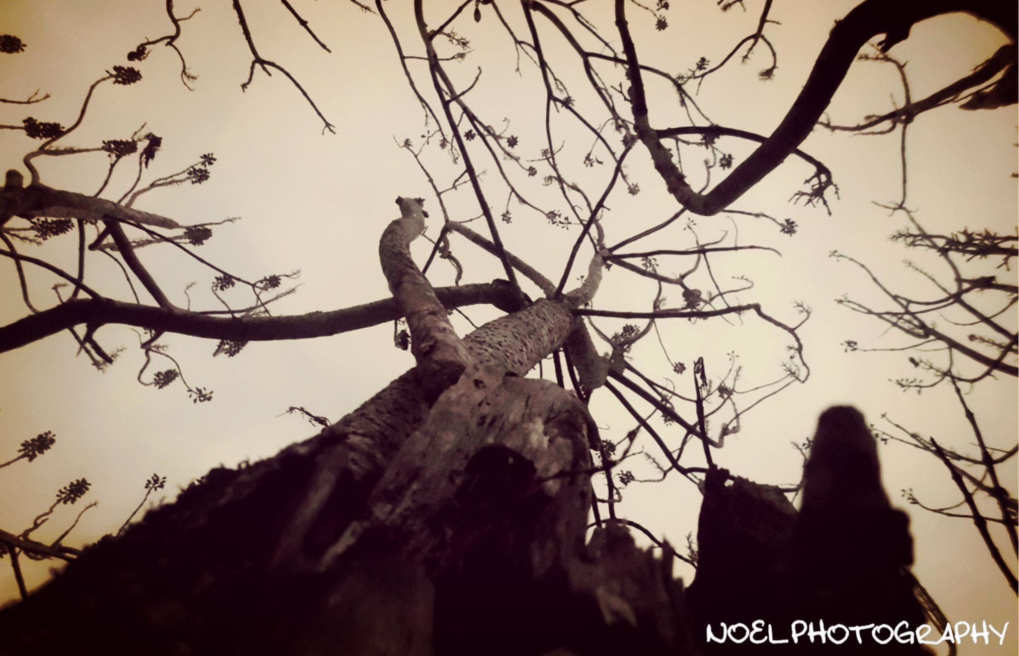 The Spooky Old Tree by Noel Photography