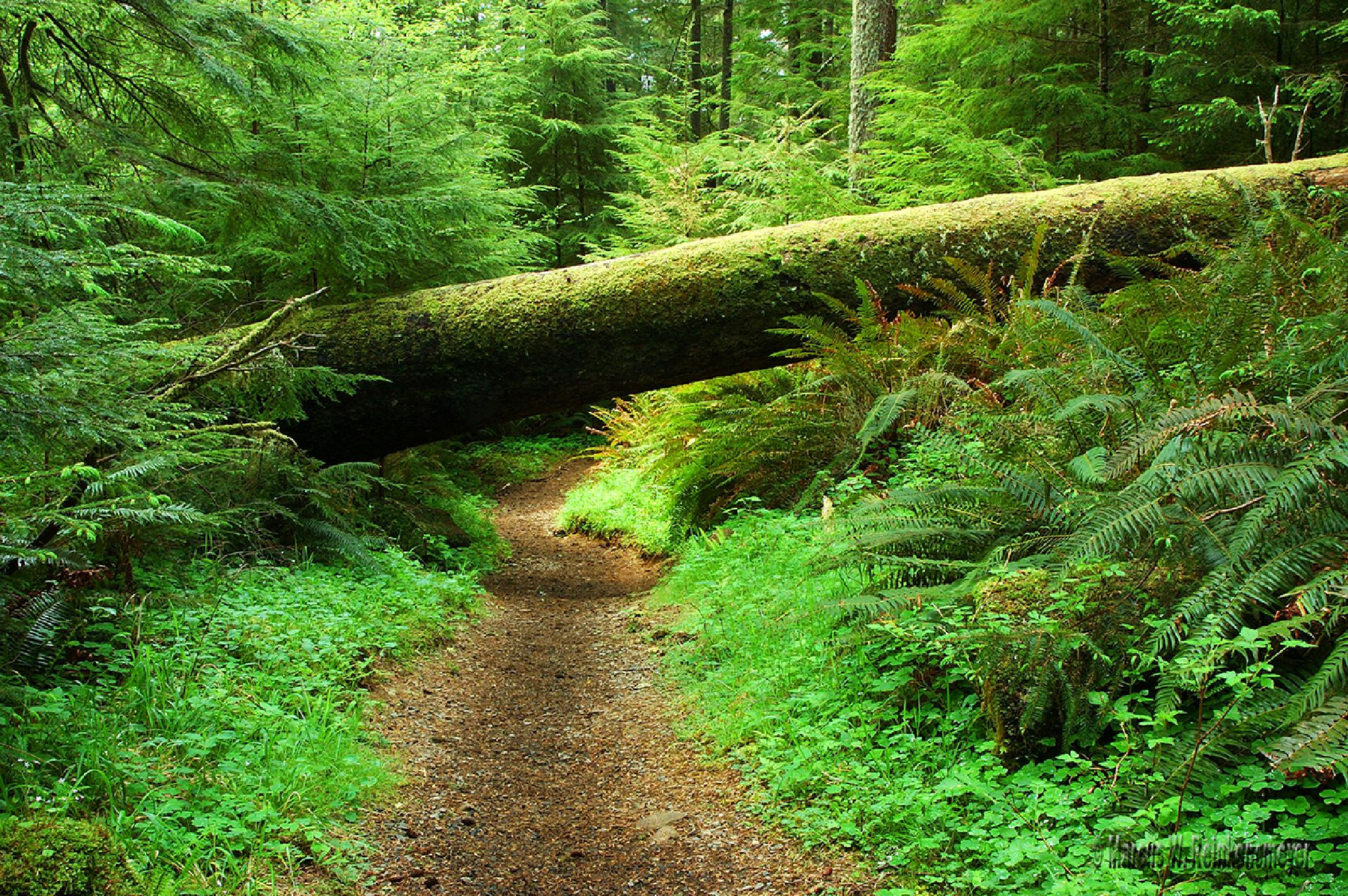 Less Traveled Path by reinkensmeyer