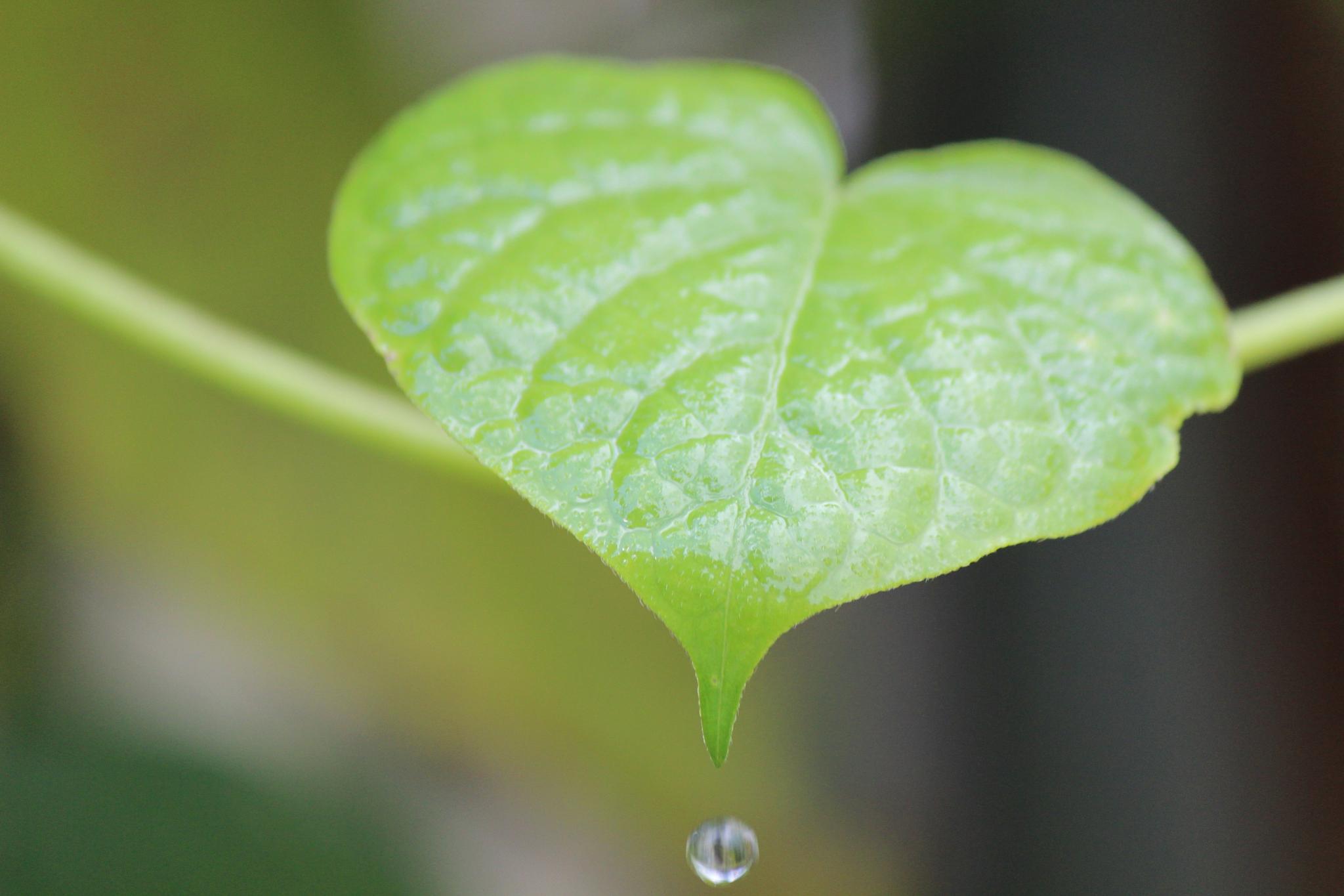 leaf by LAIMA