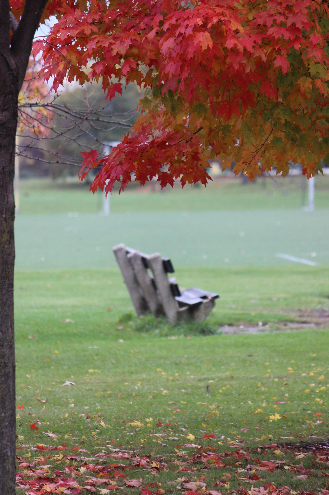 autumn by LAIMA