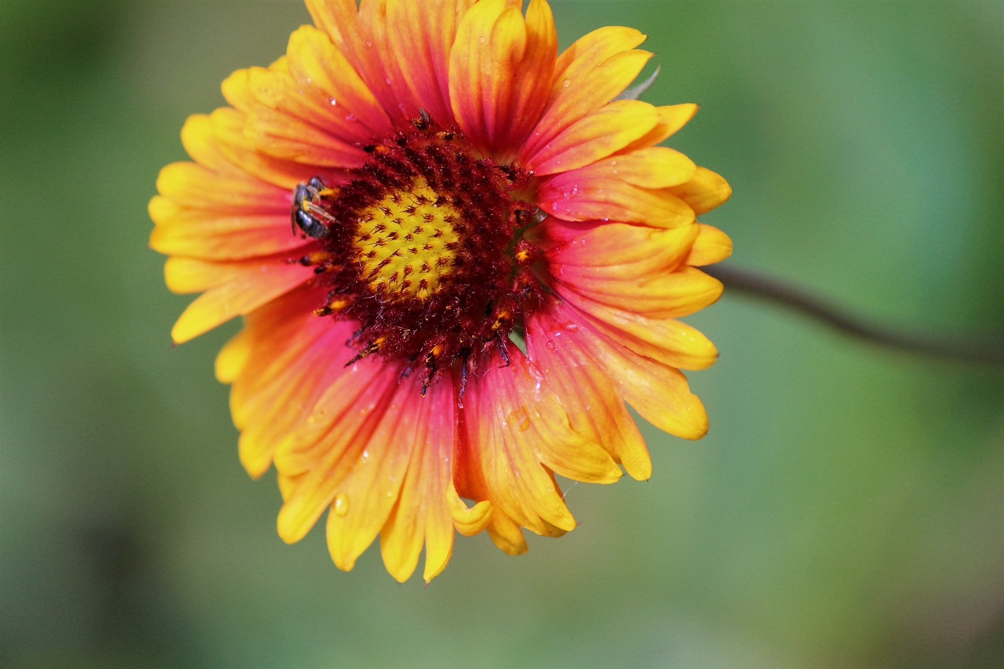 flower by LAIMA