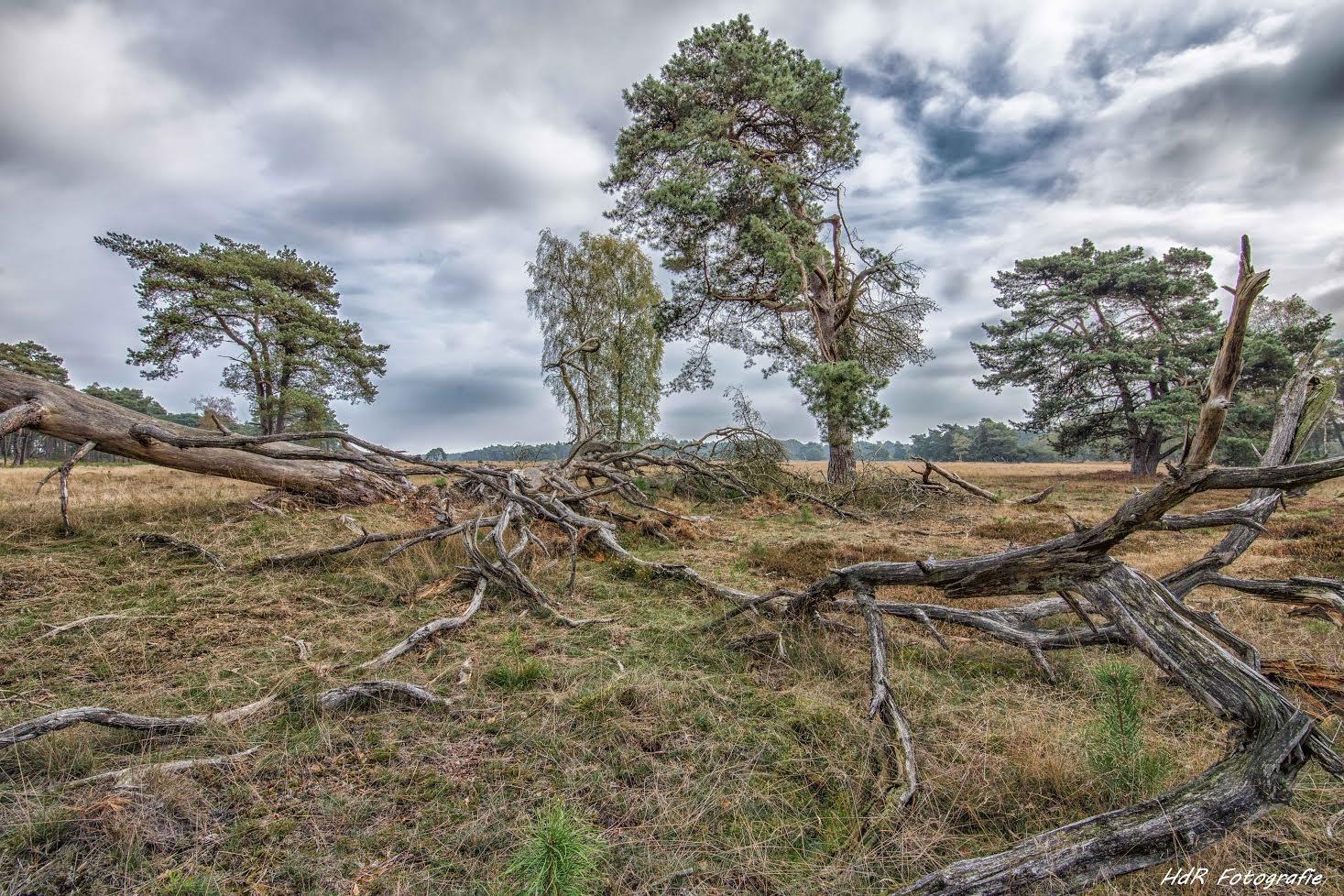 Dead Trees by Herman de Raaf