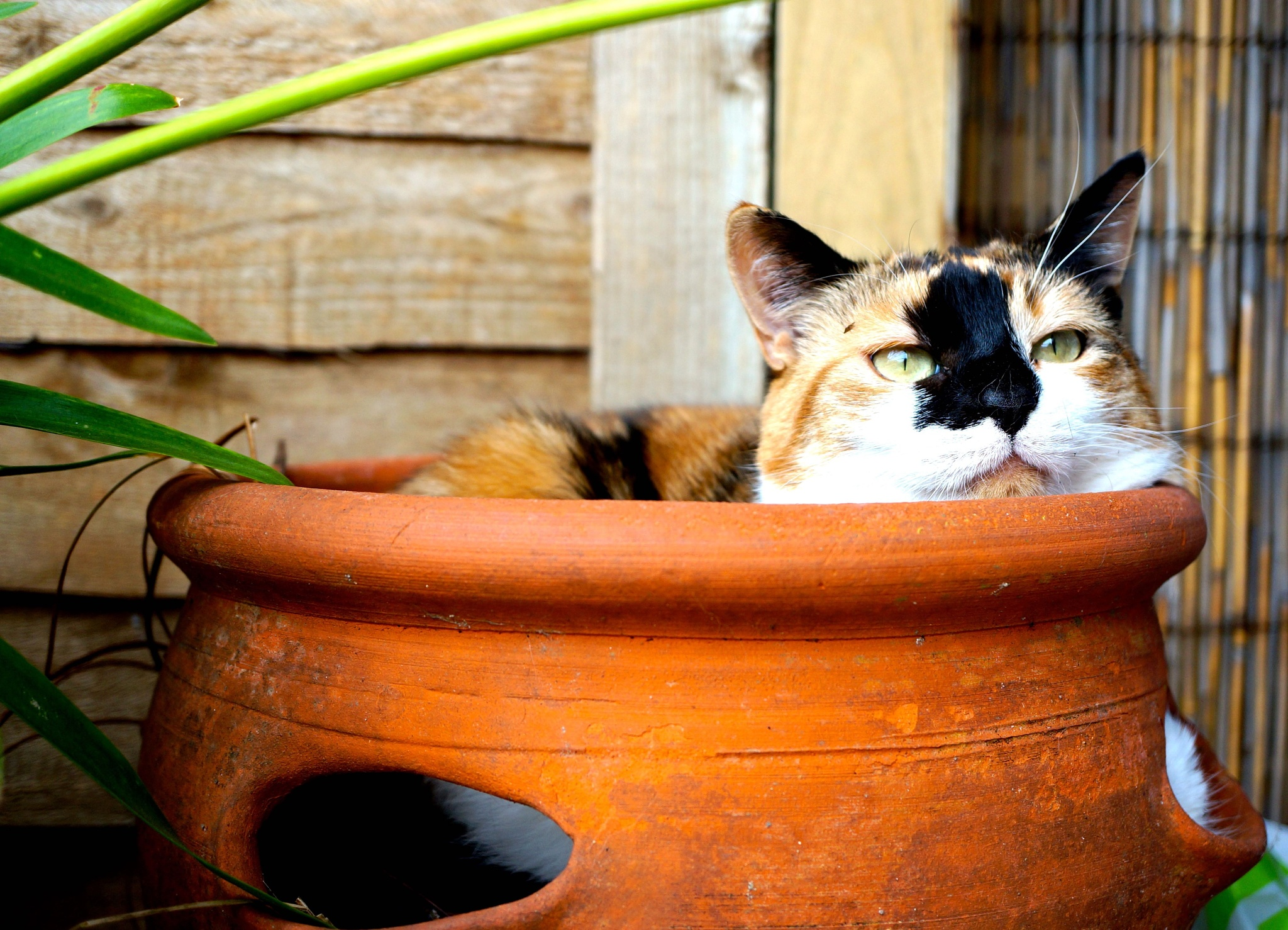 Cat in a Strawberry Pot by emsgems