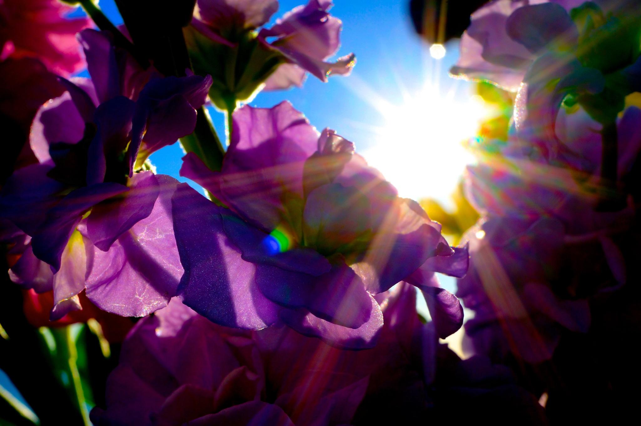 Through the Petals by emsgems