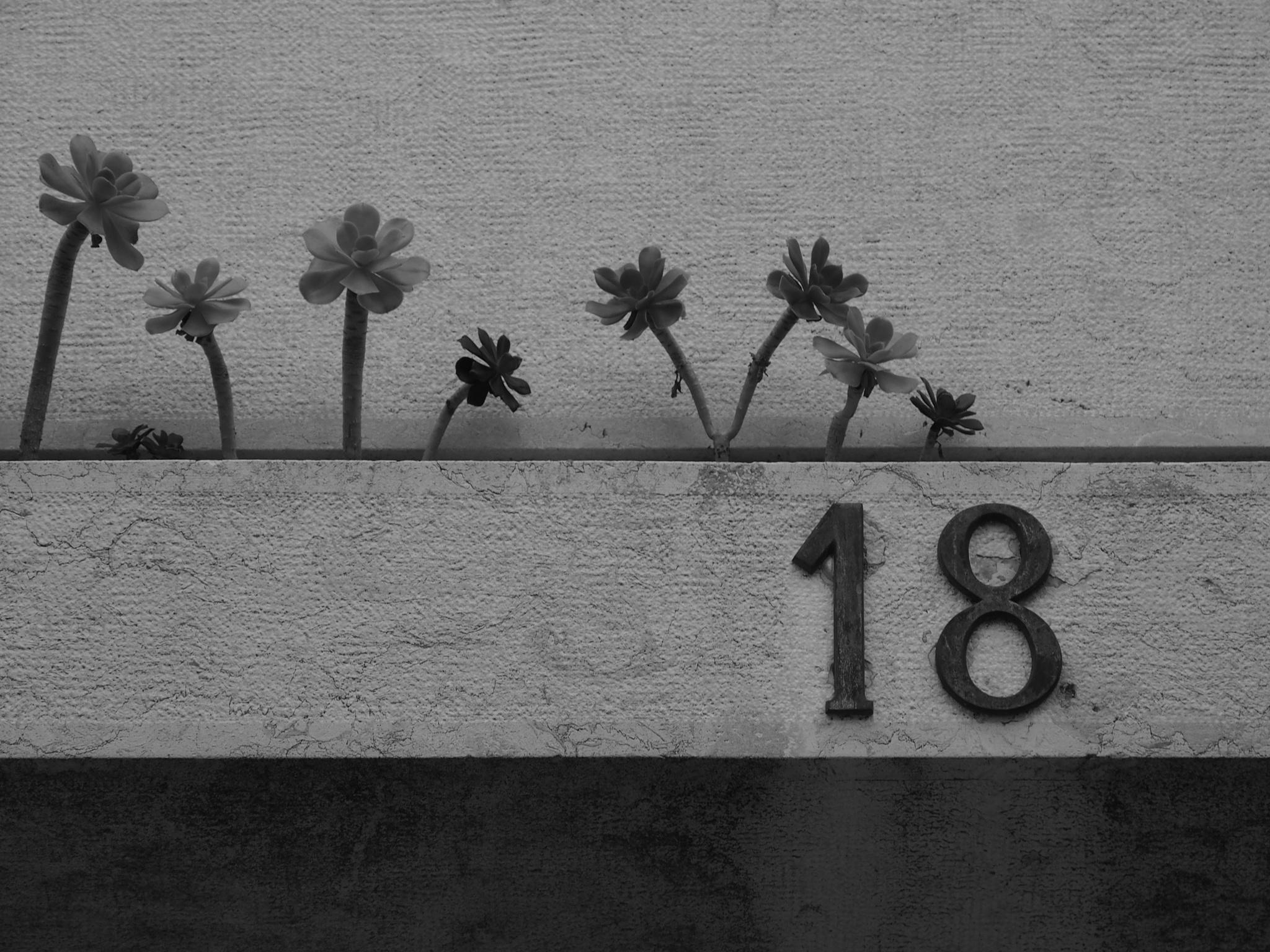 Eighteen by Carlos MG Reis