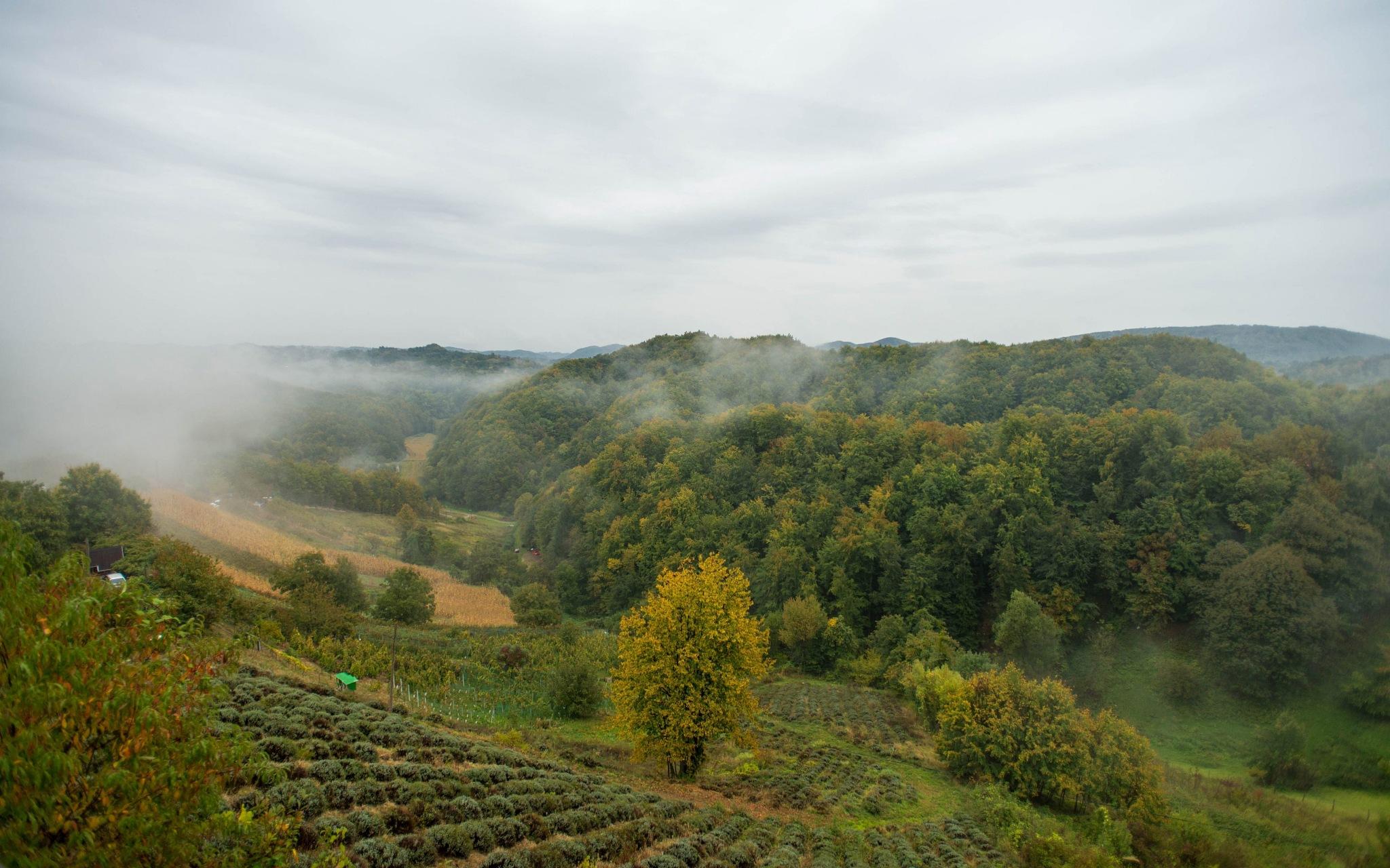 misty day by Vlado Ferencic