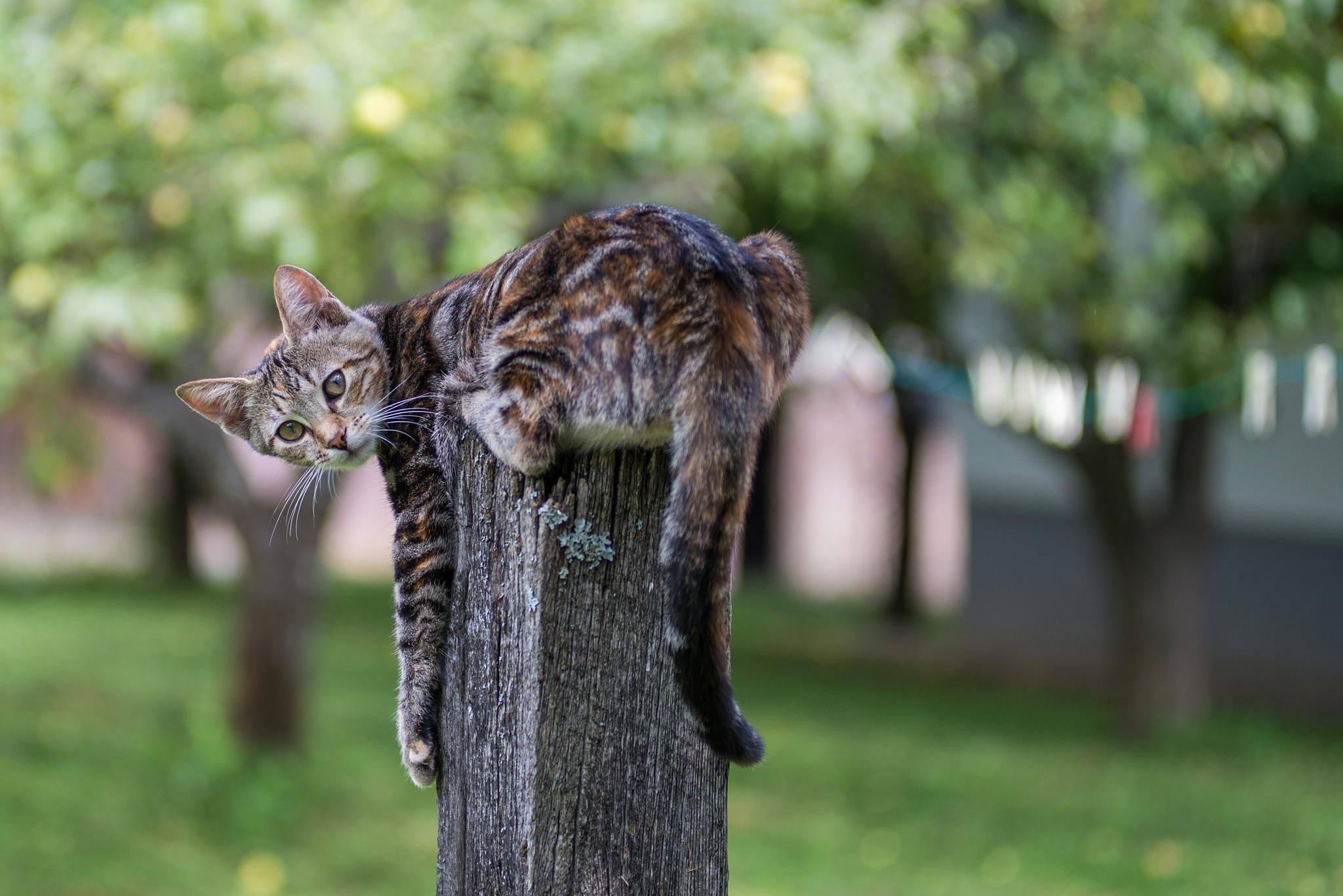kitty by Vlado Ferencic