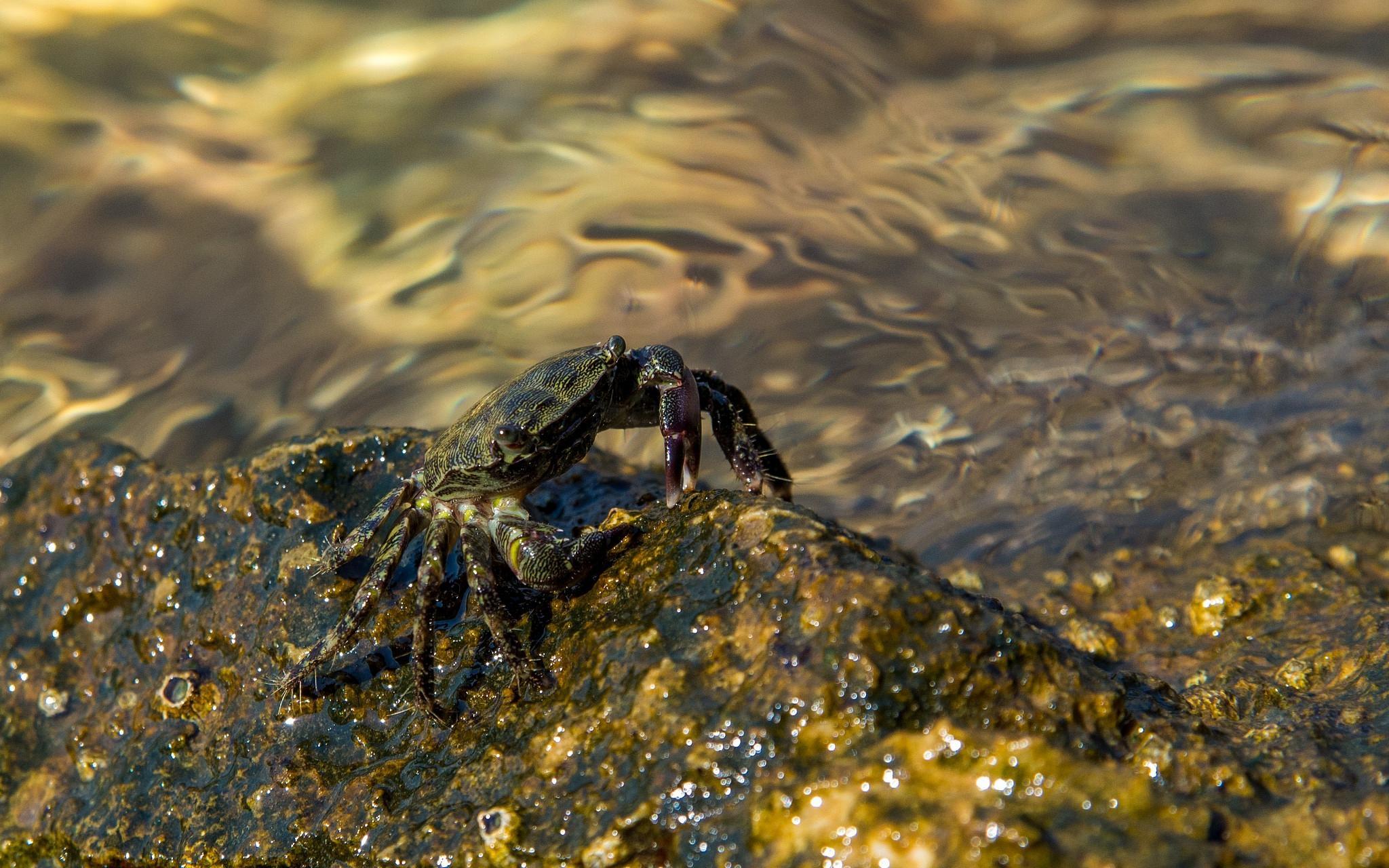 Sea Creatures by Vlado Ferencic