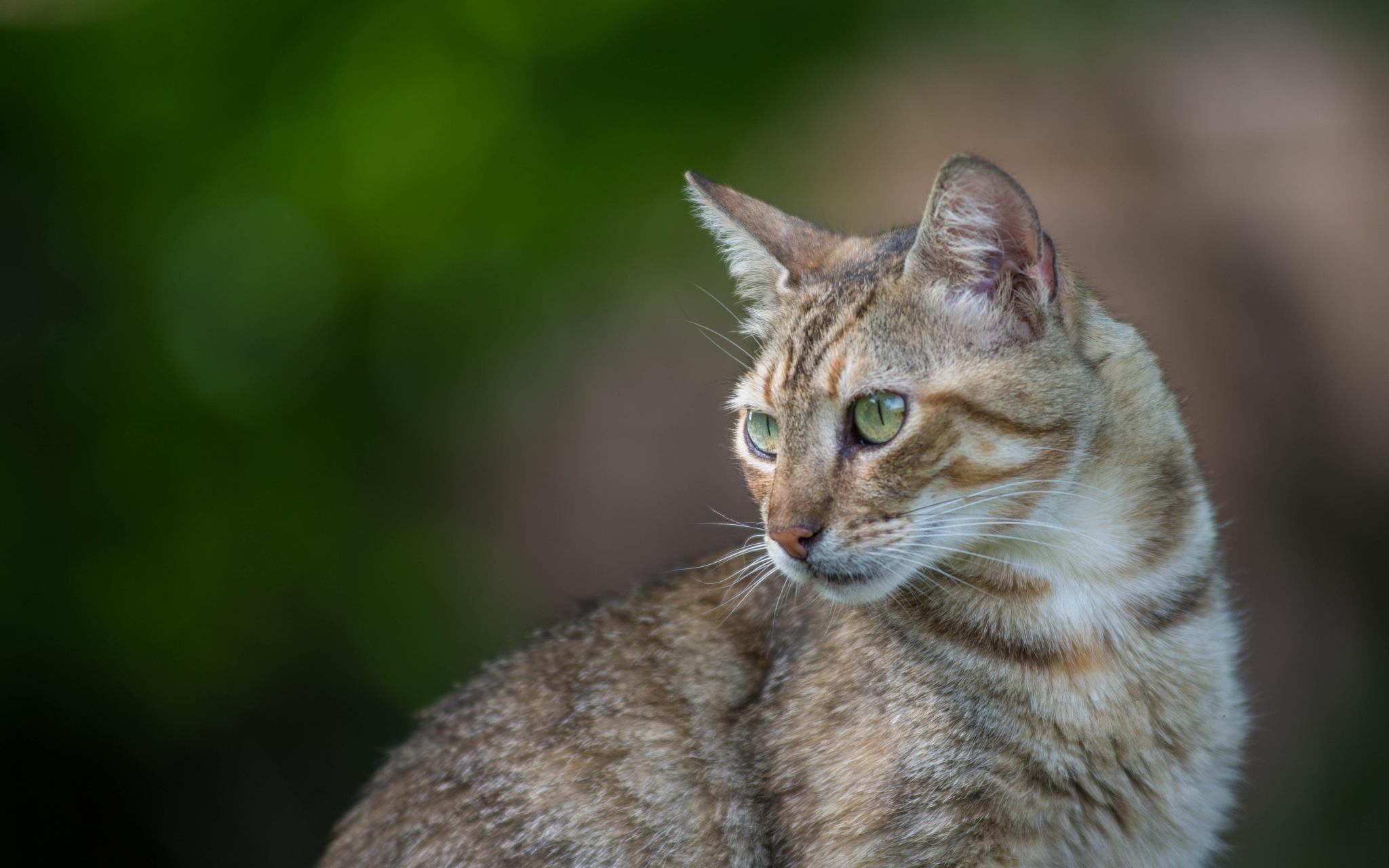 cat by Vlado Ferencic