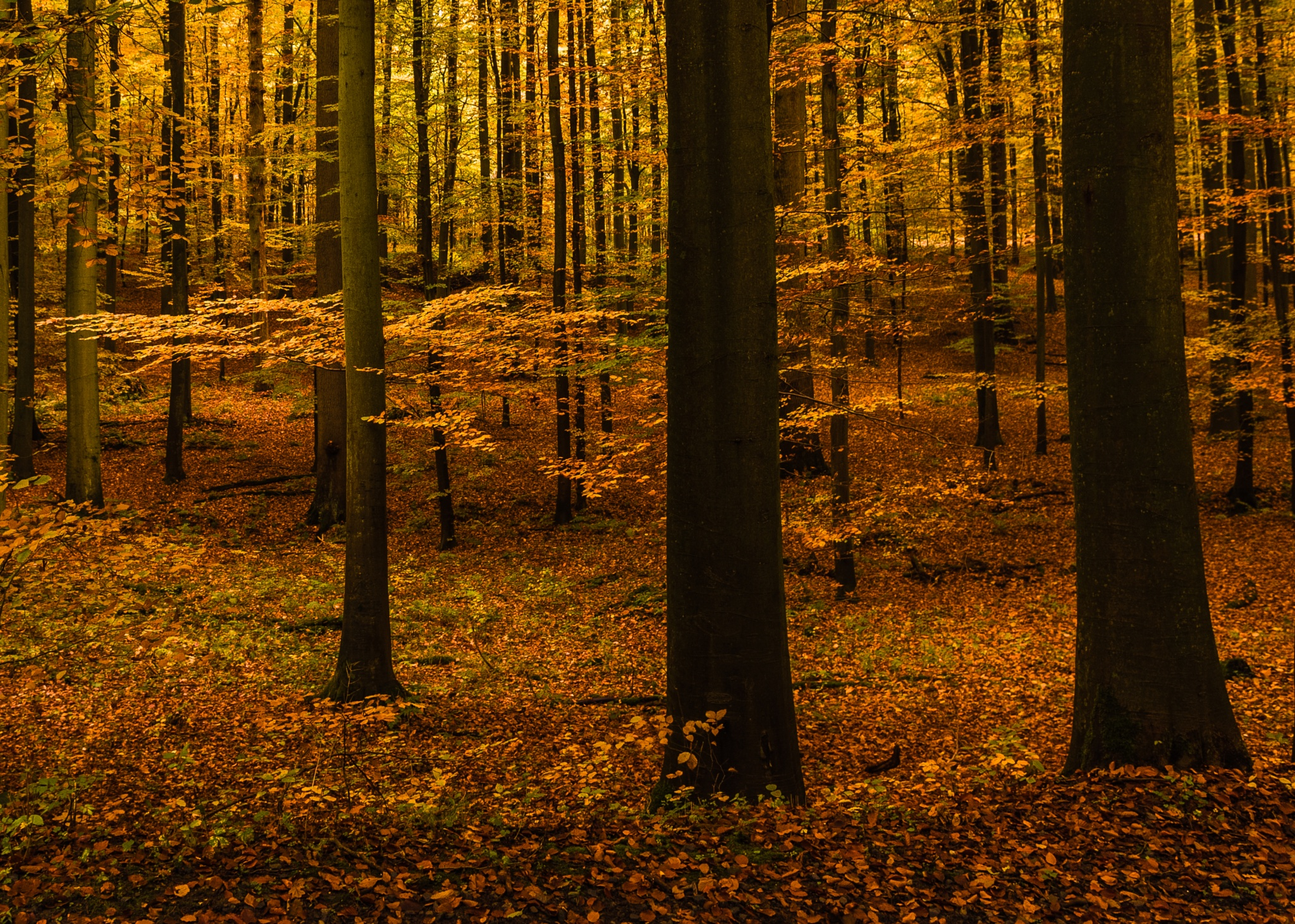 Forest by EricBeullens