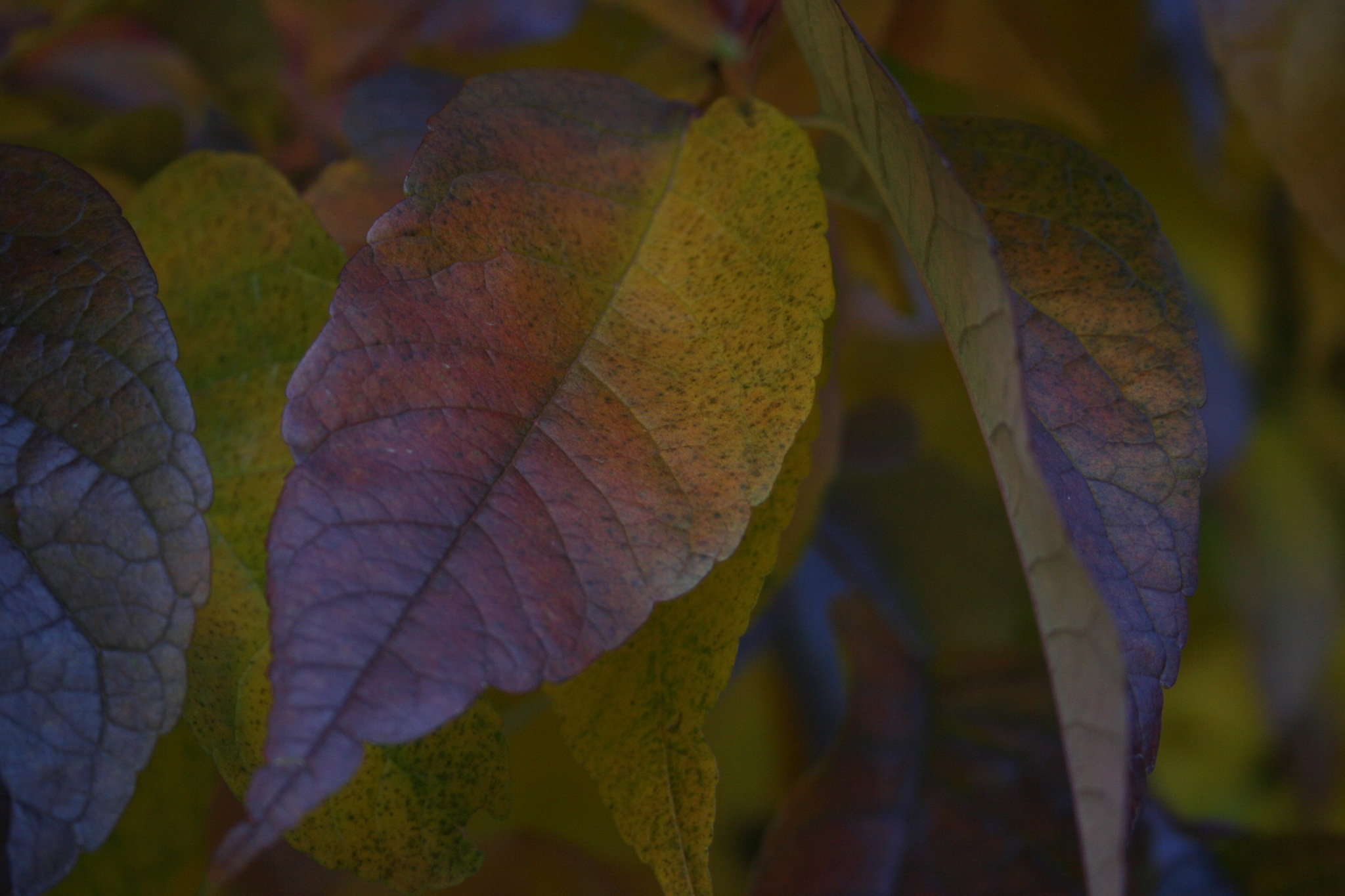Fall Leaves by debs.nelsonfisher
