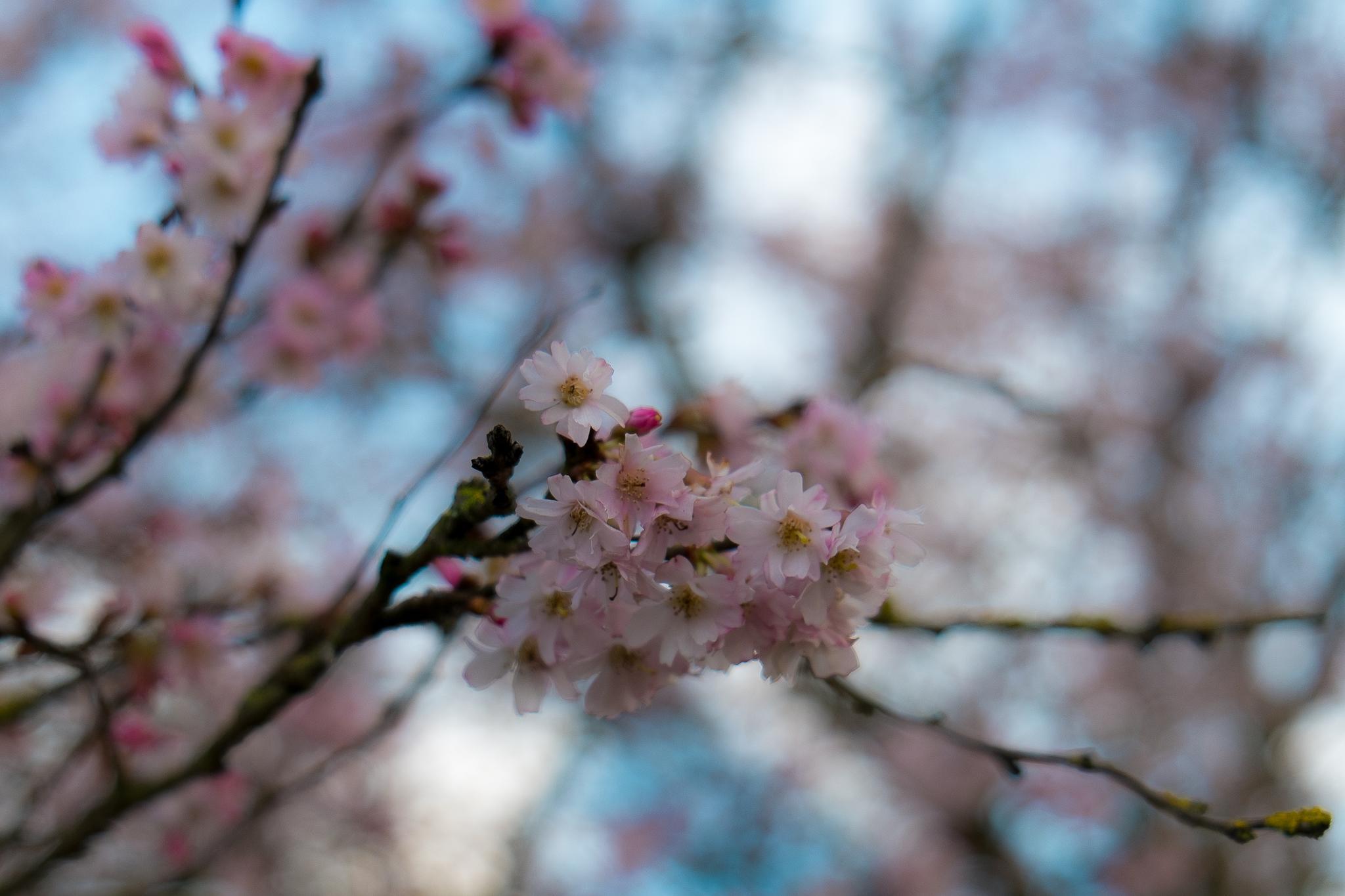 Bokeh... by photosdan