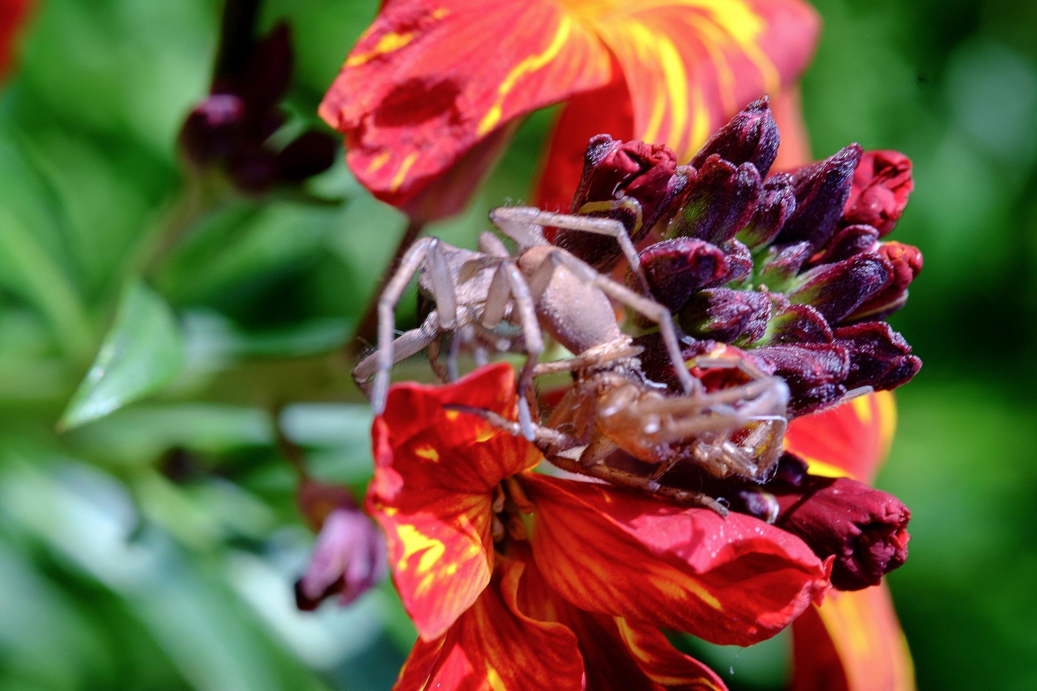 naissance de l'araigniée.1 by photosdan