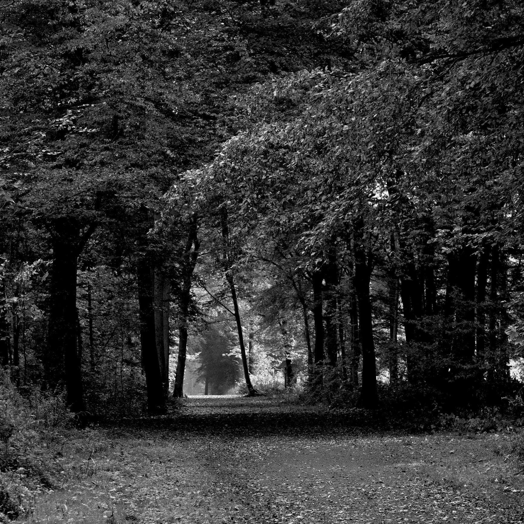 Promenade en forêt... by photosdan