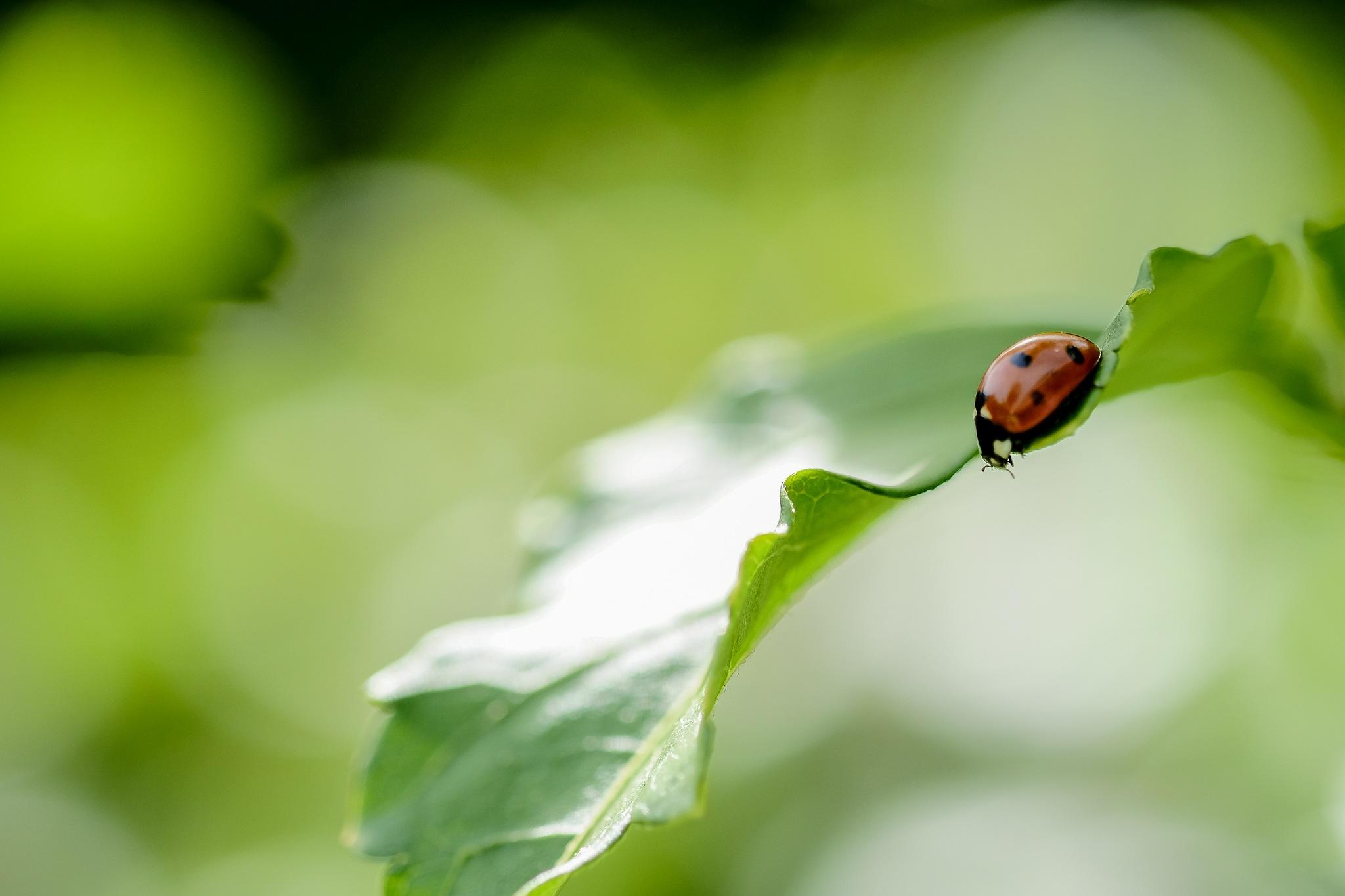 Ladybug.. by photosdan
