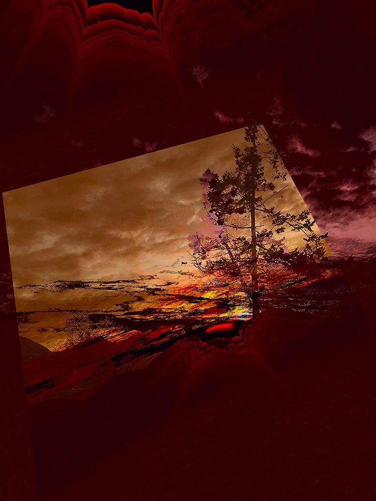 Sechelt tree 2 by elaine