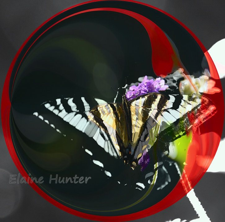 Swallowtail Butterfly by elaine