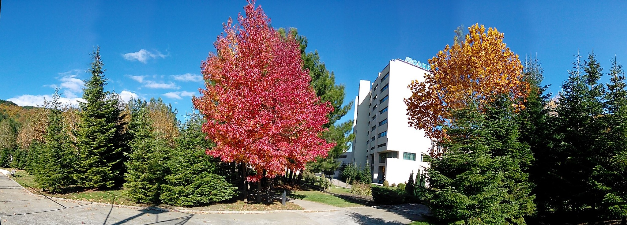 Fall colors by Roman Prikhodko