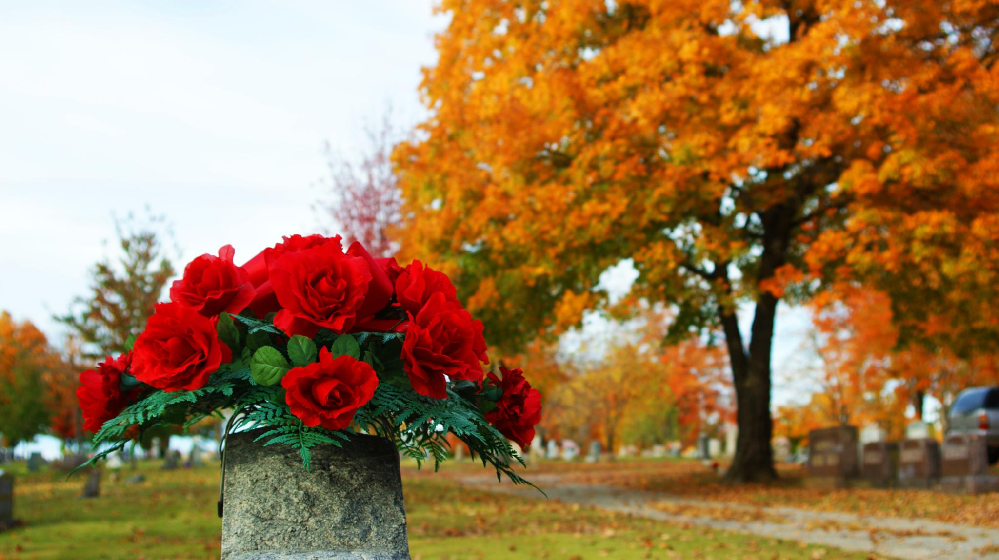 Photo in Landscape #red #roses #flowers #grave #fall #tree