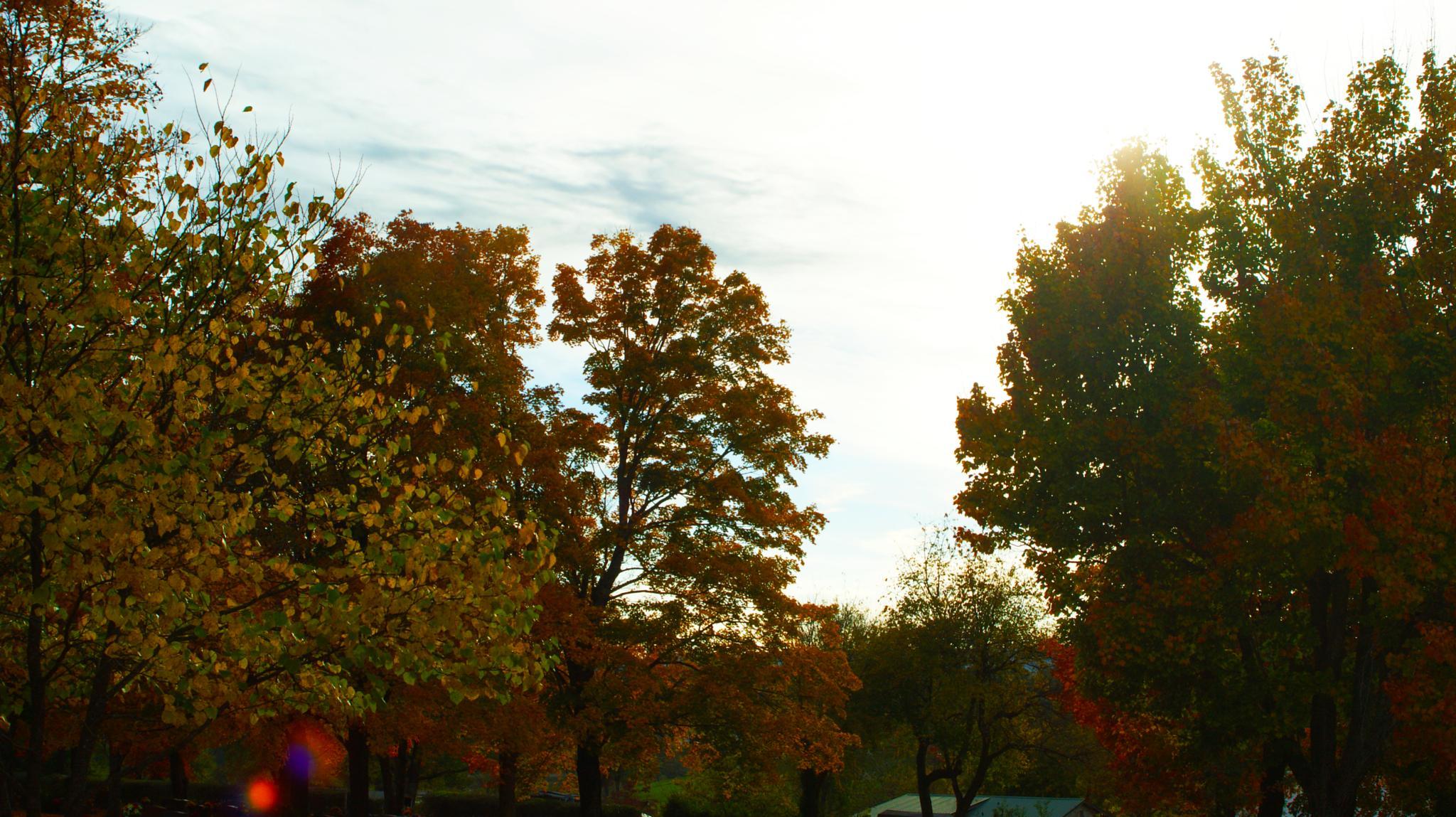 Photo in Landscape #trees #sun #fall #cemetery