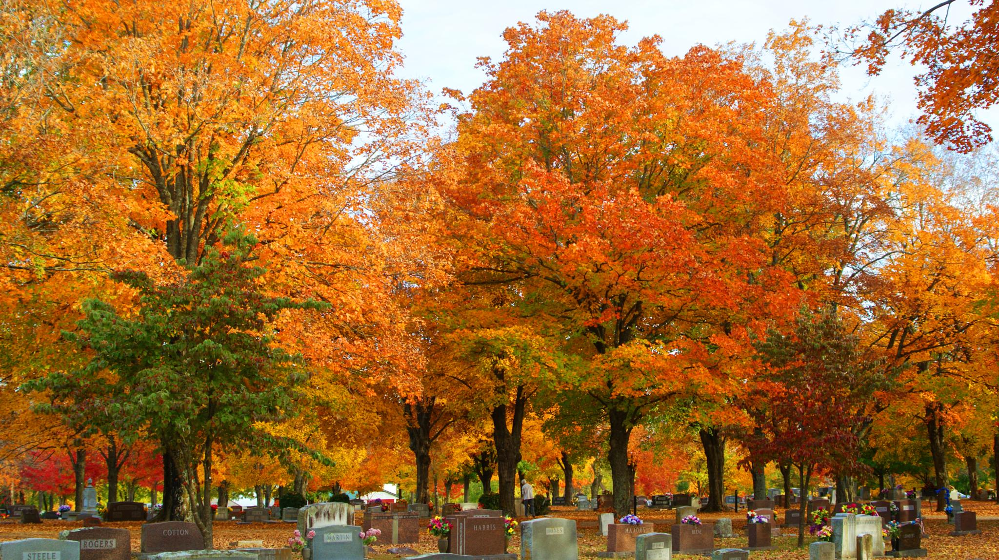 Photo in Landscape #maplewood #trees #cemetery #fall #dslr #camera #cam