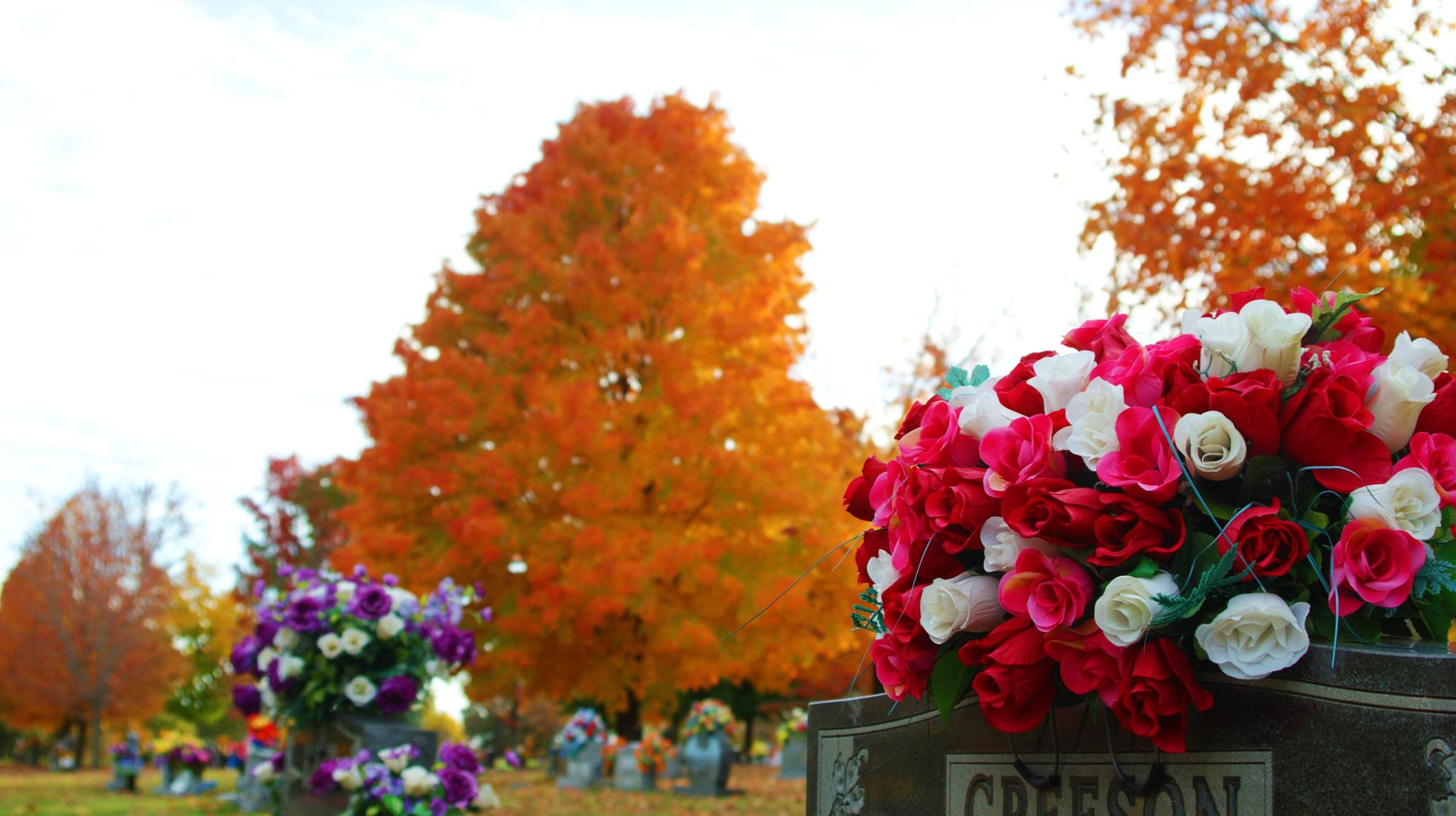 Photo in Landscape #fall #flowers #trees #cemetery #dslr #camera #cam